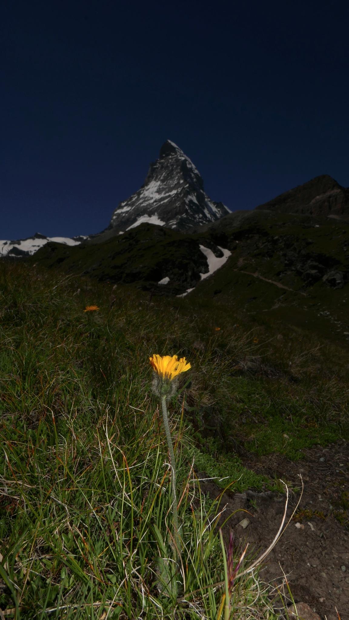 Zermatt by percy ottinger