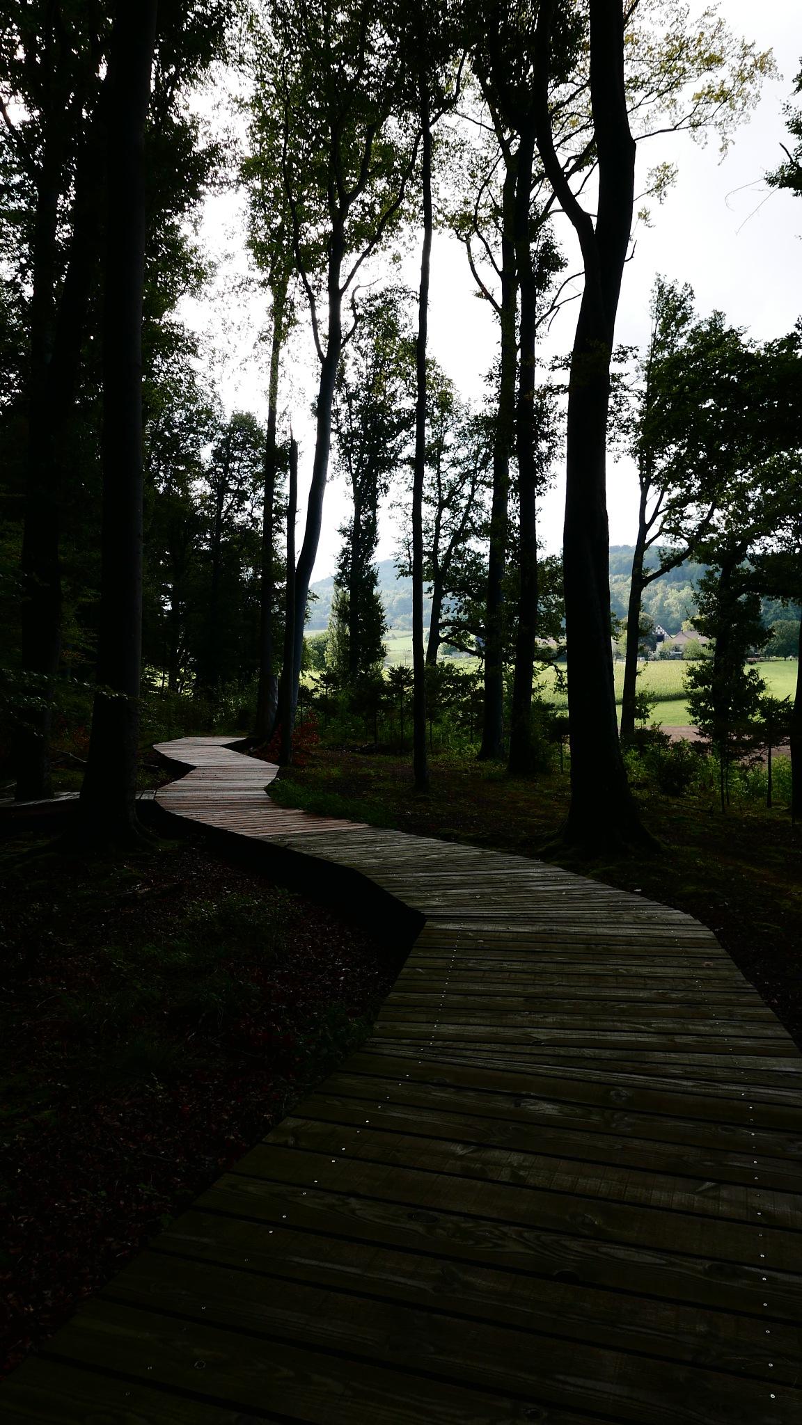 Der Holzweg by percy ottinger