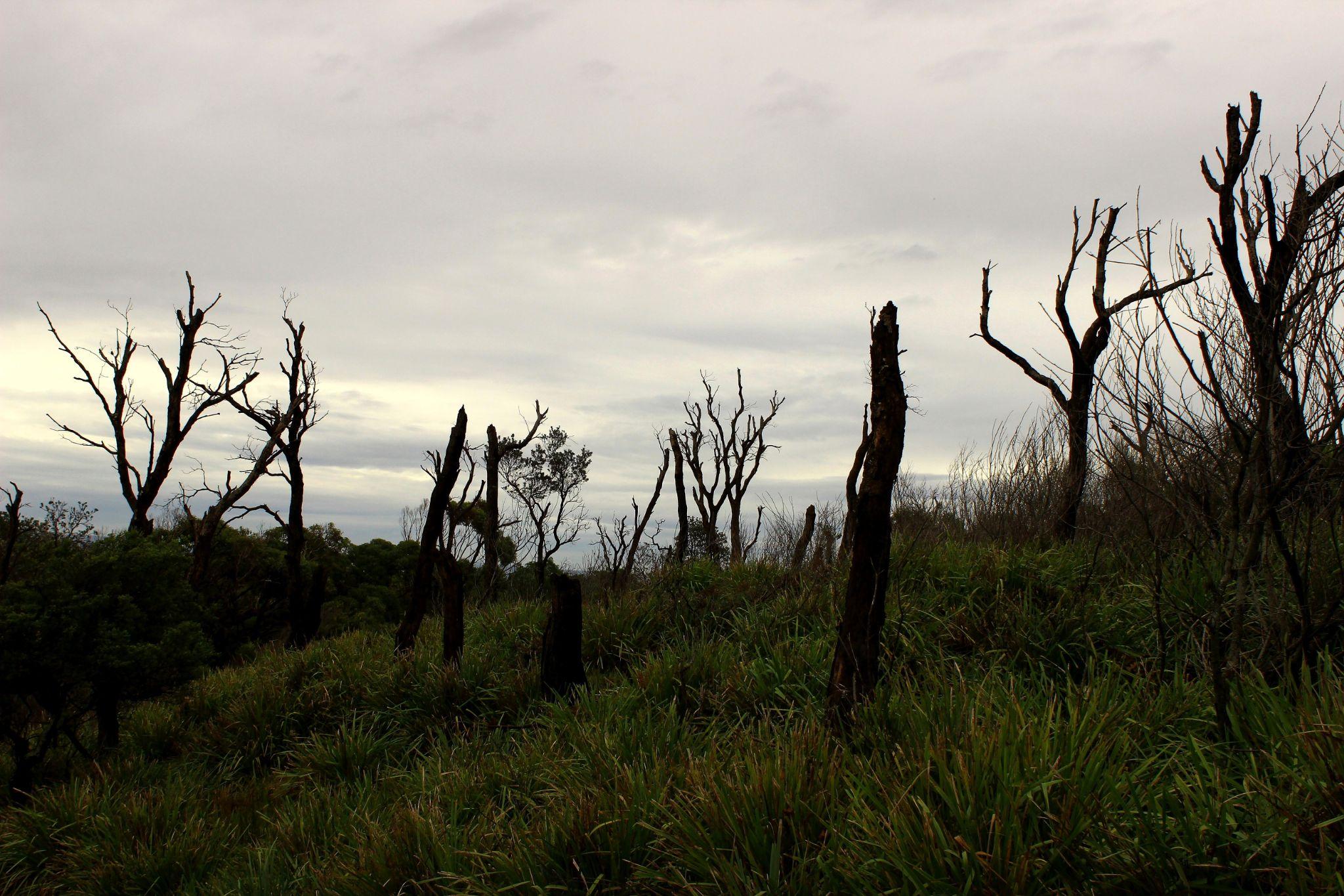 Desolation by Isabel Sottomayor