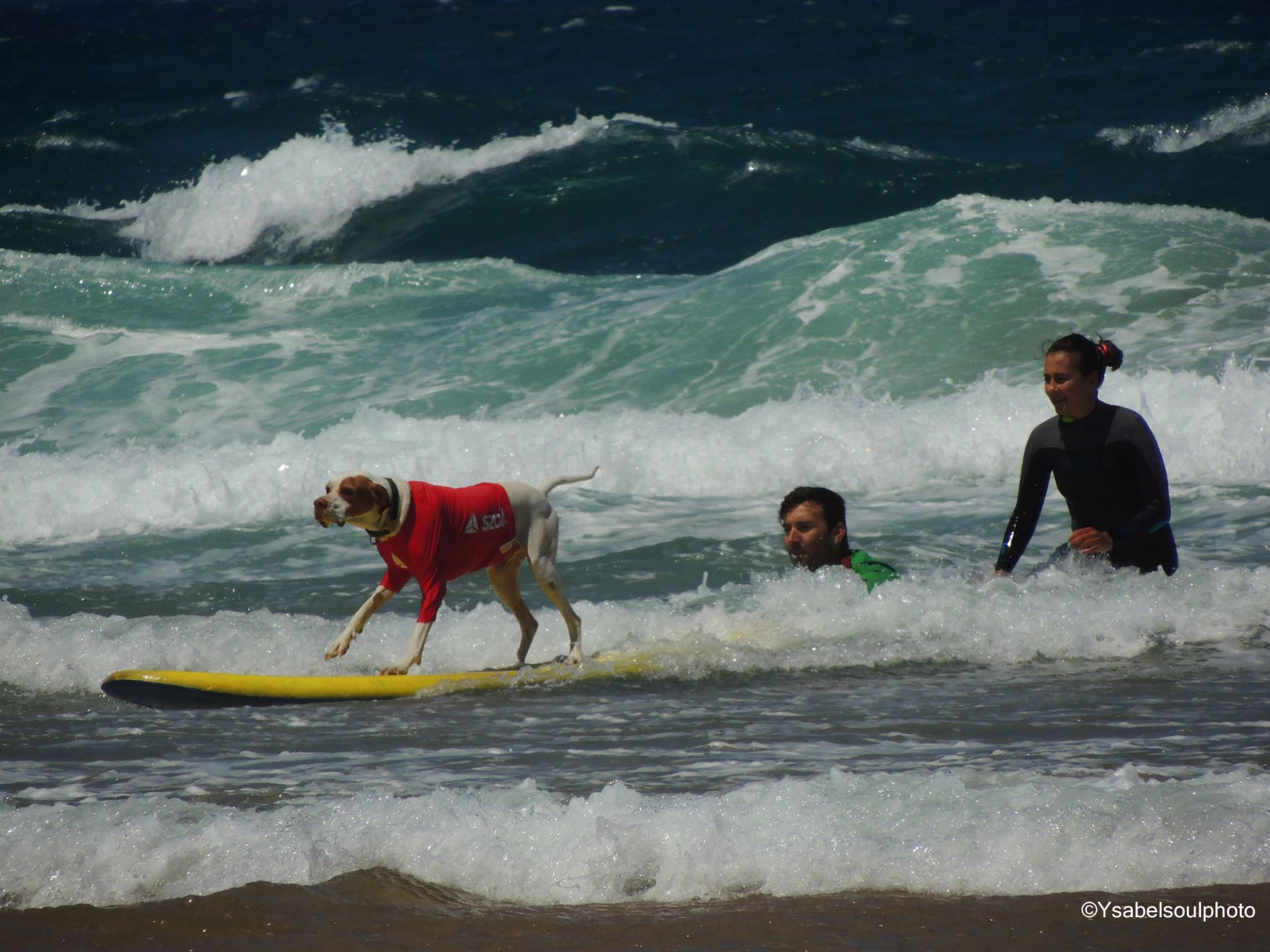 Dogs Surf Championship by Isabel Sottomayor
