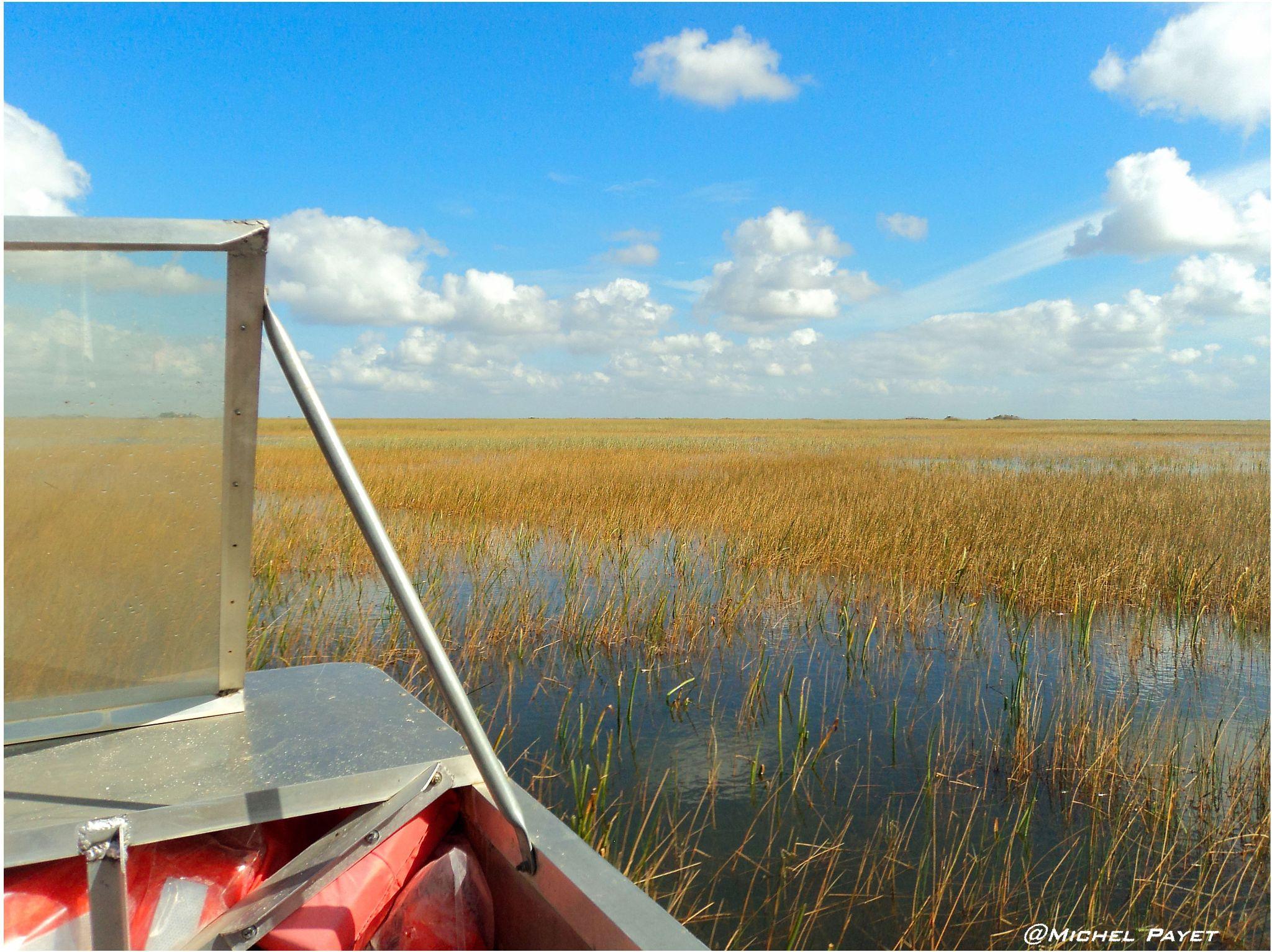 Everglades...Miami! by Michel Payet