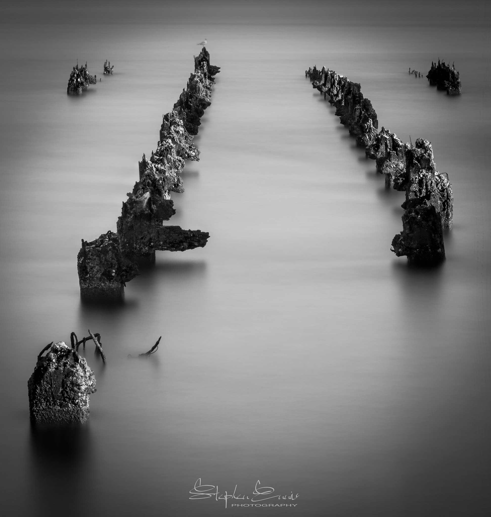 Old Stumps by Stephen Ennis Photography