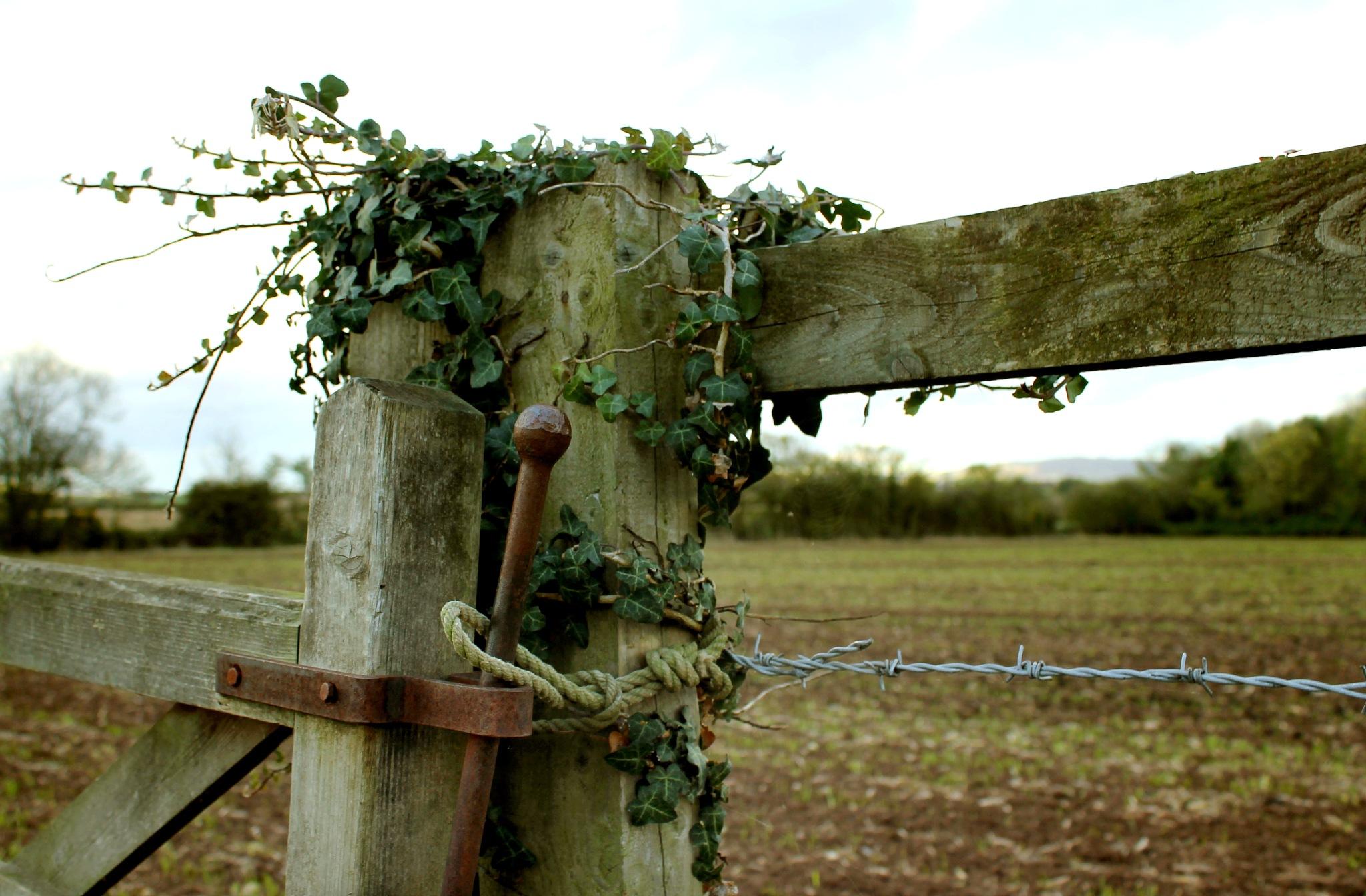 Secured by Helen Burridge
