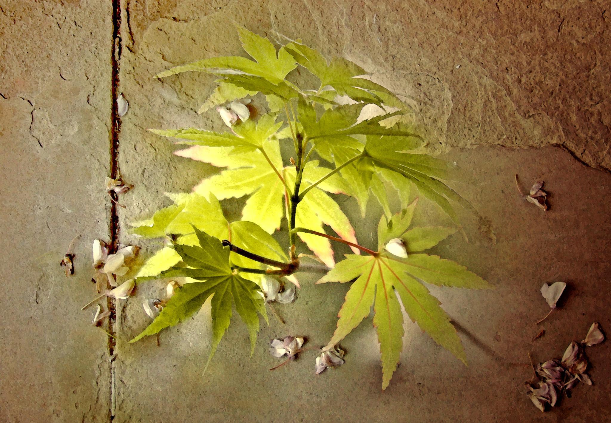 Leaves and petals  by Helen Burridge