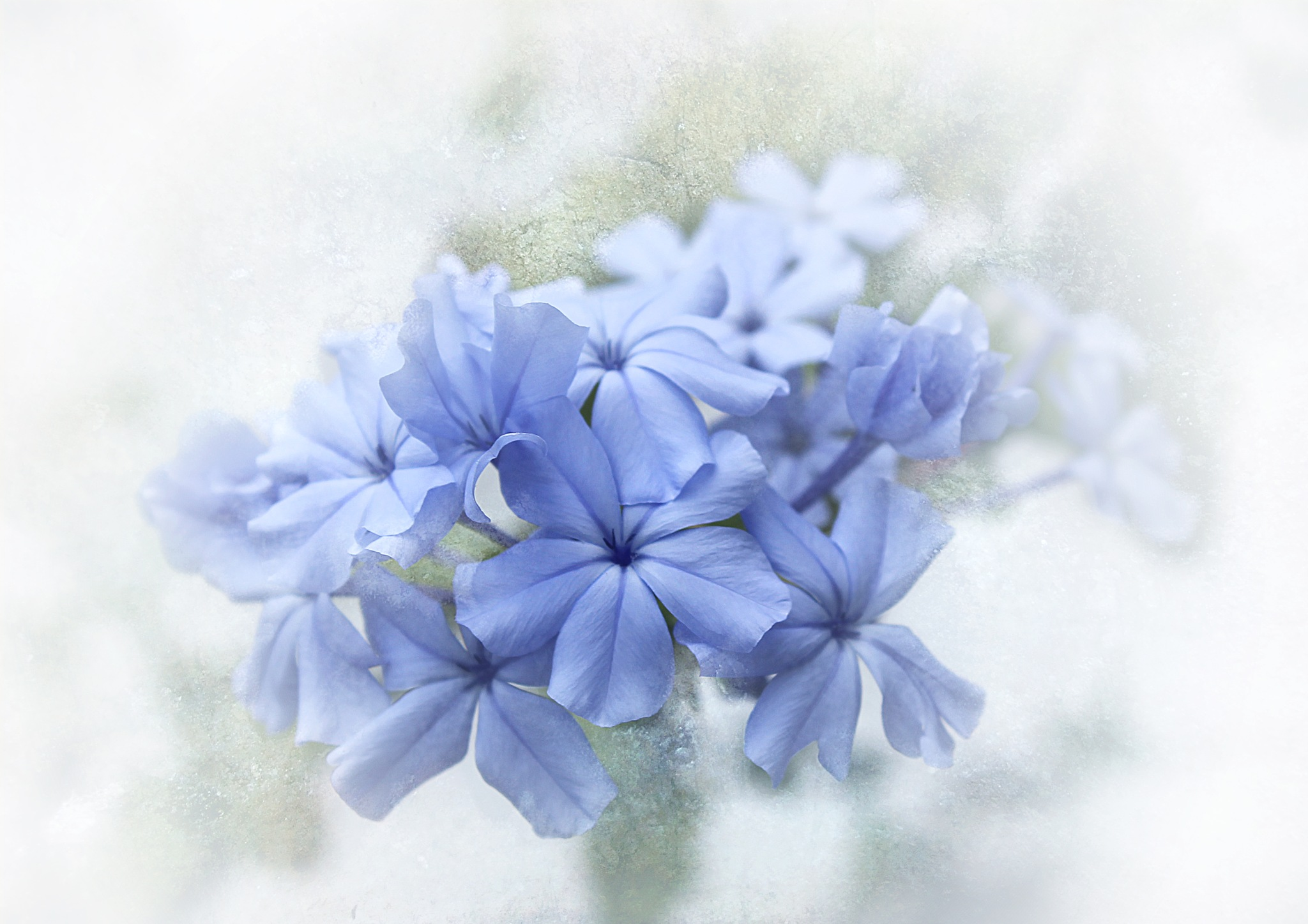 Blue by Helen Burridge