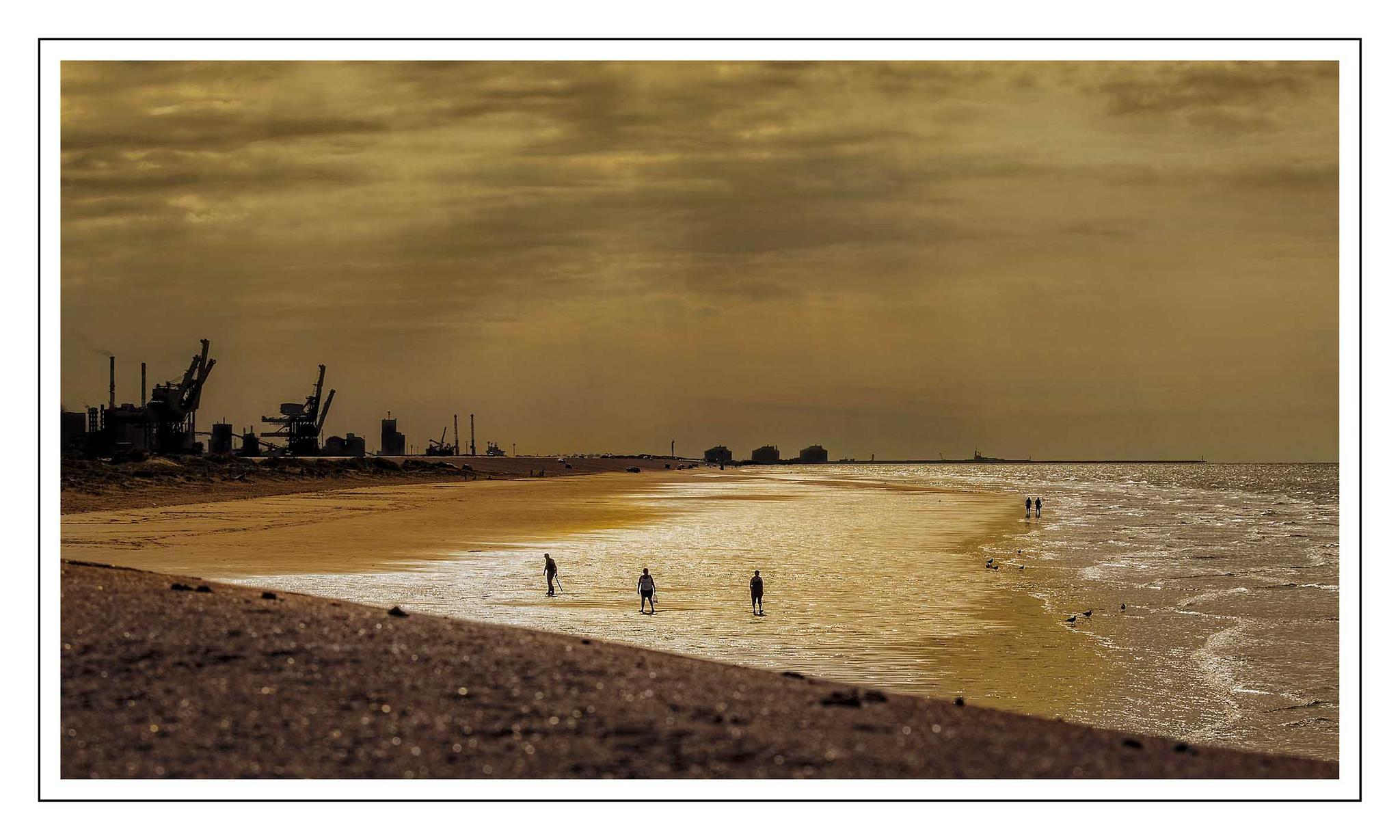 golden north sea by danita