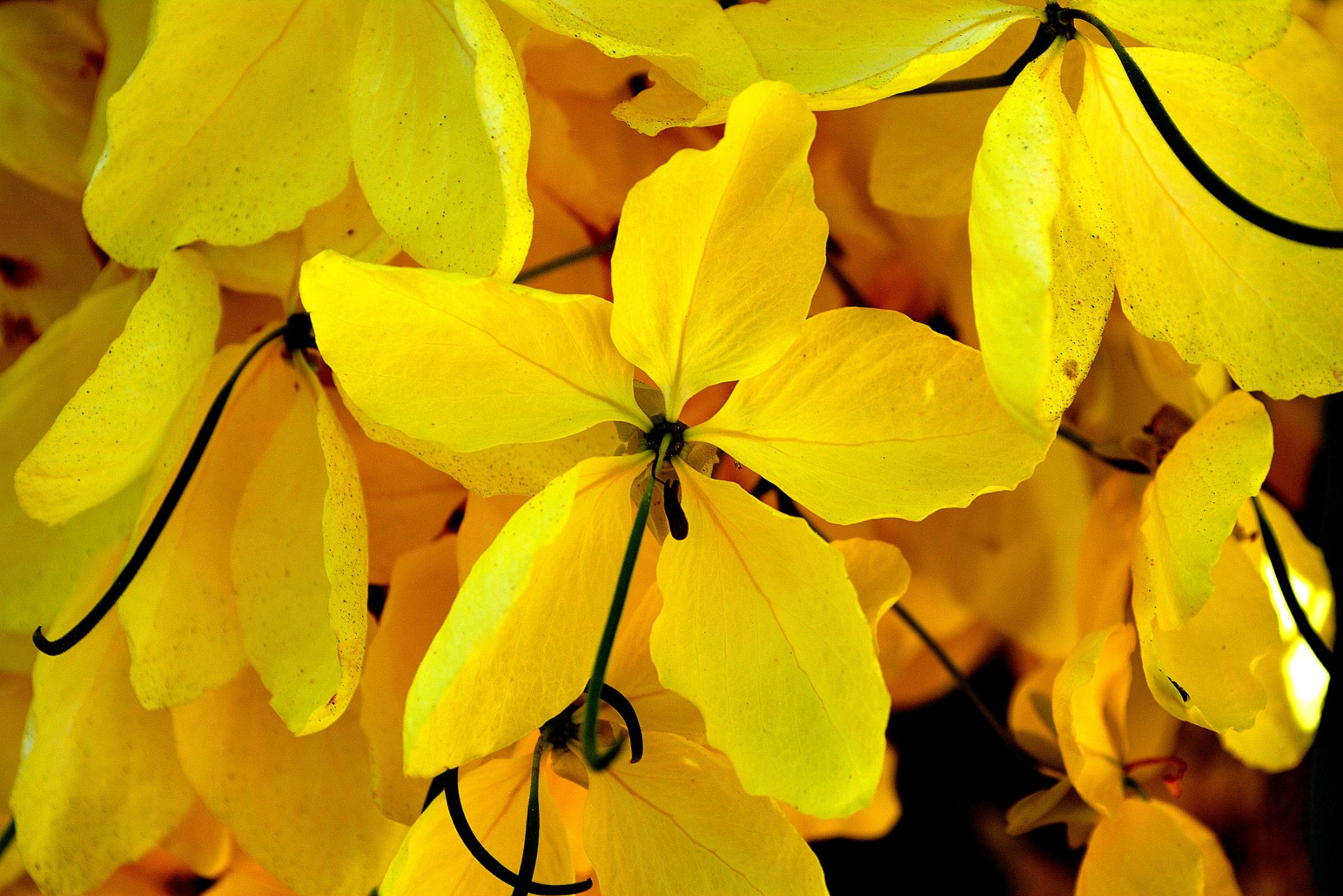 This stunning yellow by אשר שמולביץ