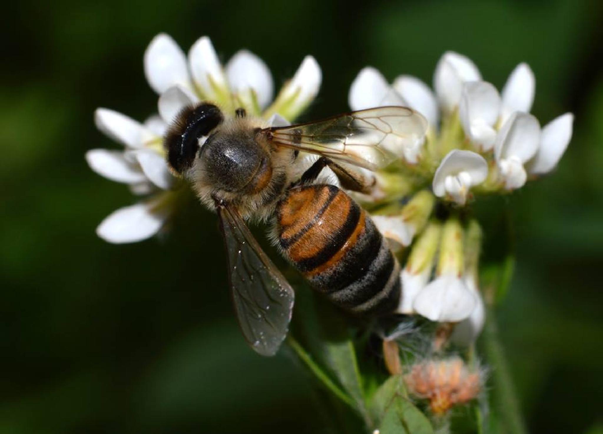 Arı bal, bende onun derdindeyim by Cetin Abdurrahman