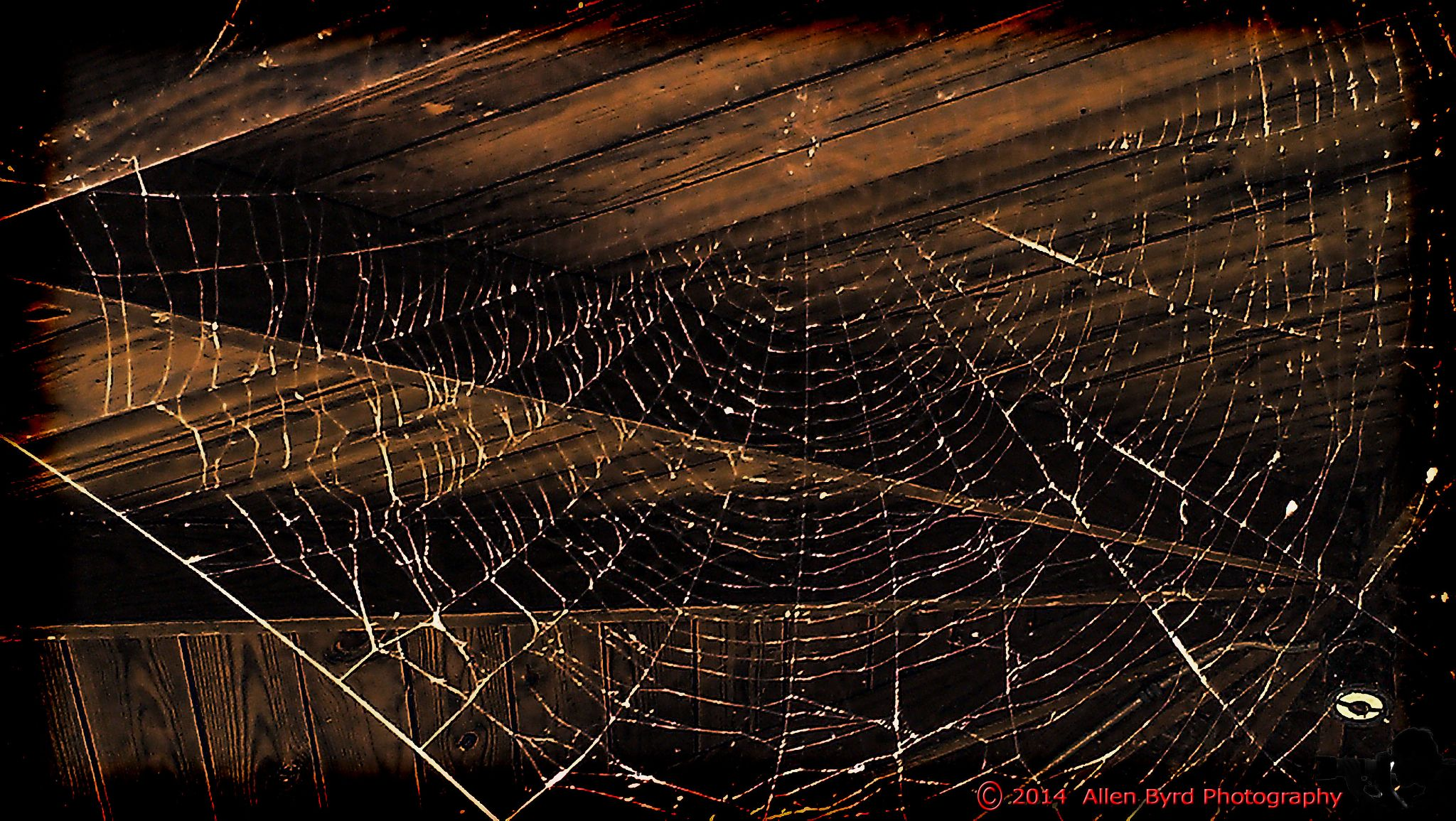spideweb-1 by Allen Byrd Photography