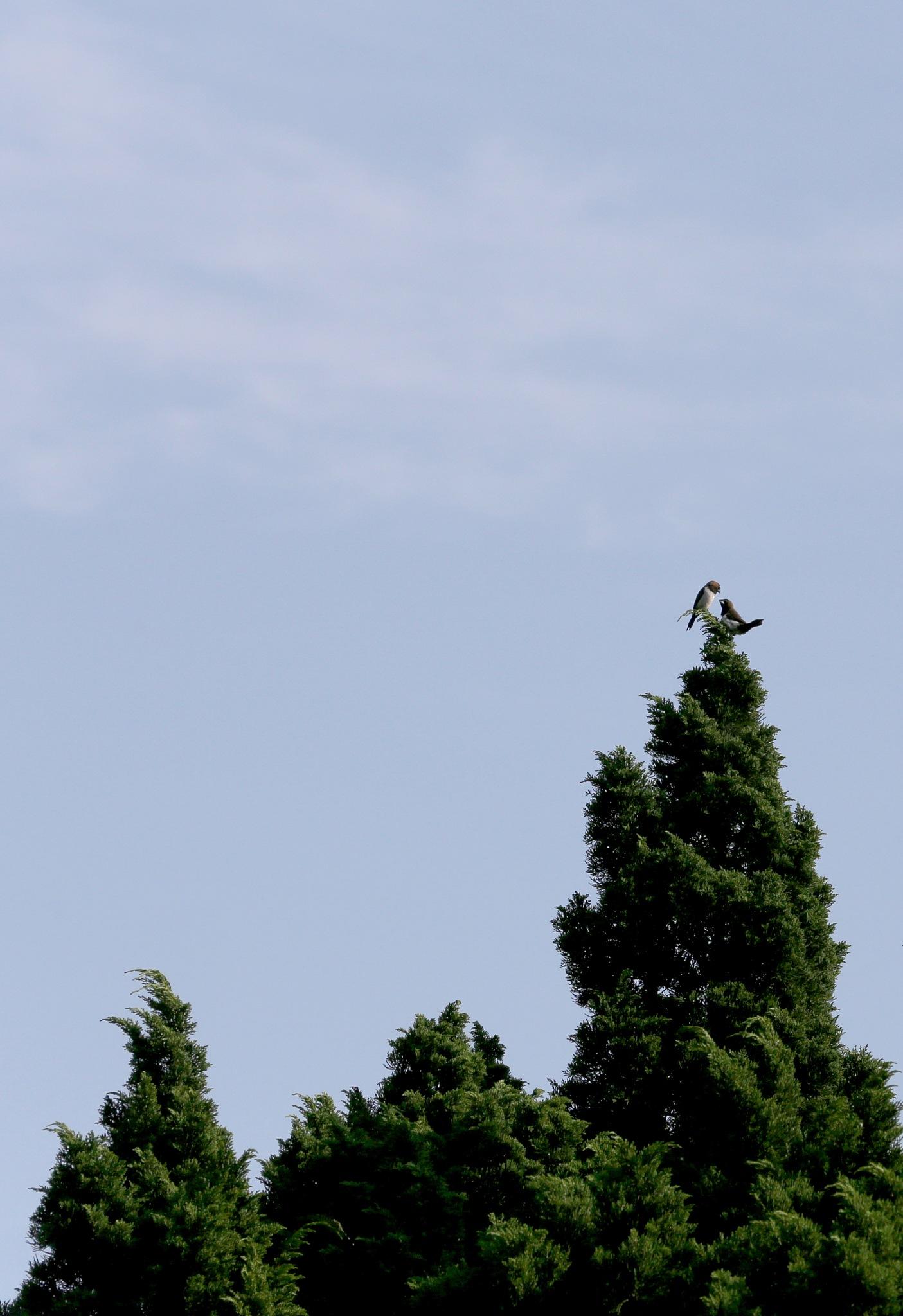 A couple of birds on the tree by Mashudi Damanik