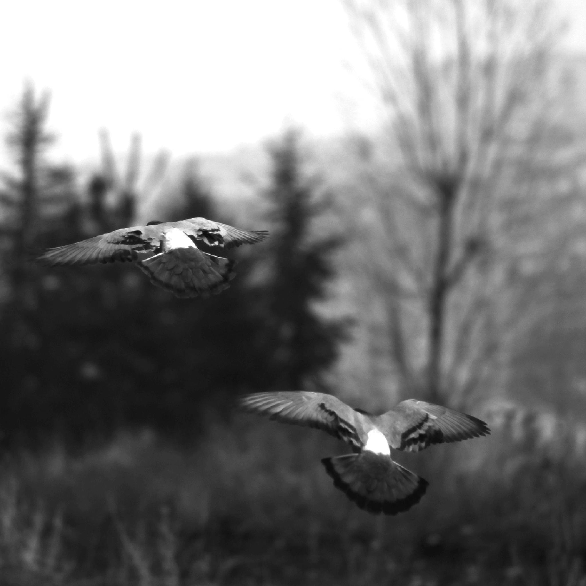 Autumn birds IV by Ziya YILDIRIM