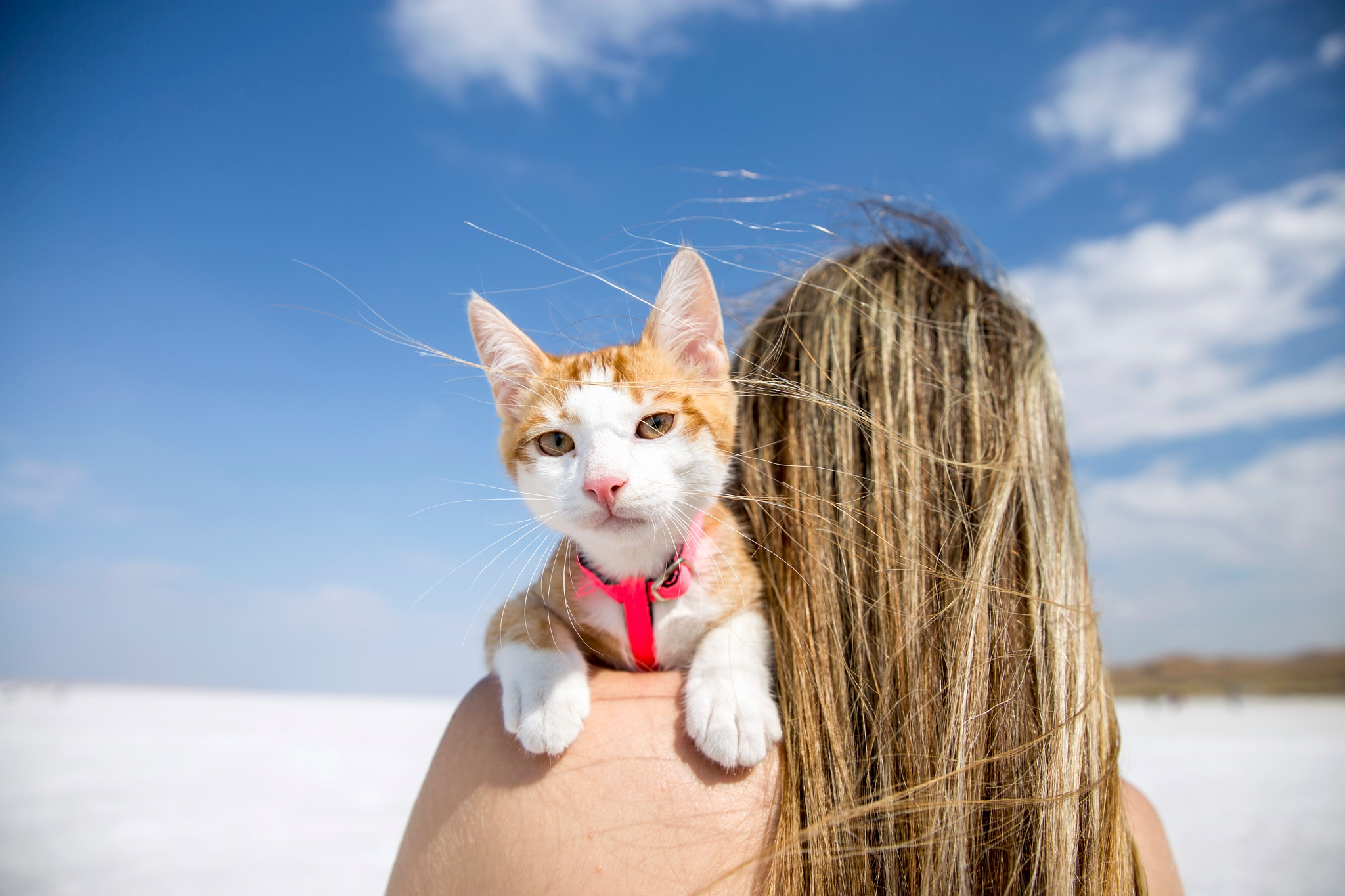 Sweet Cat by Ziya YILDIRIM
