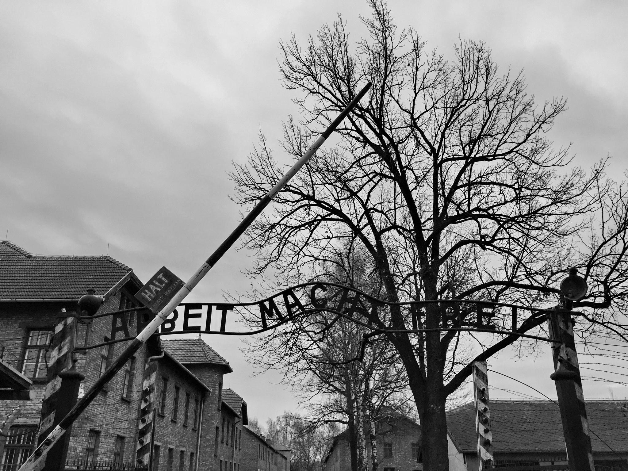 Auschwitz  by Richard Bull