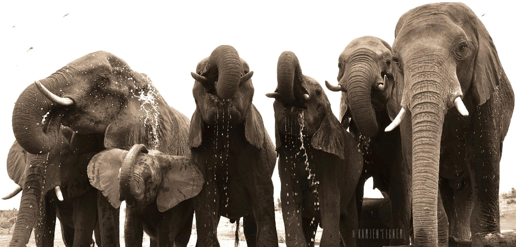Close up with a herd of wild elephants  by Karien Eigner