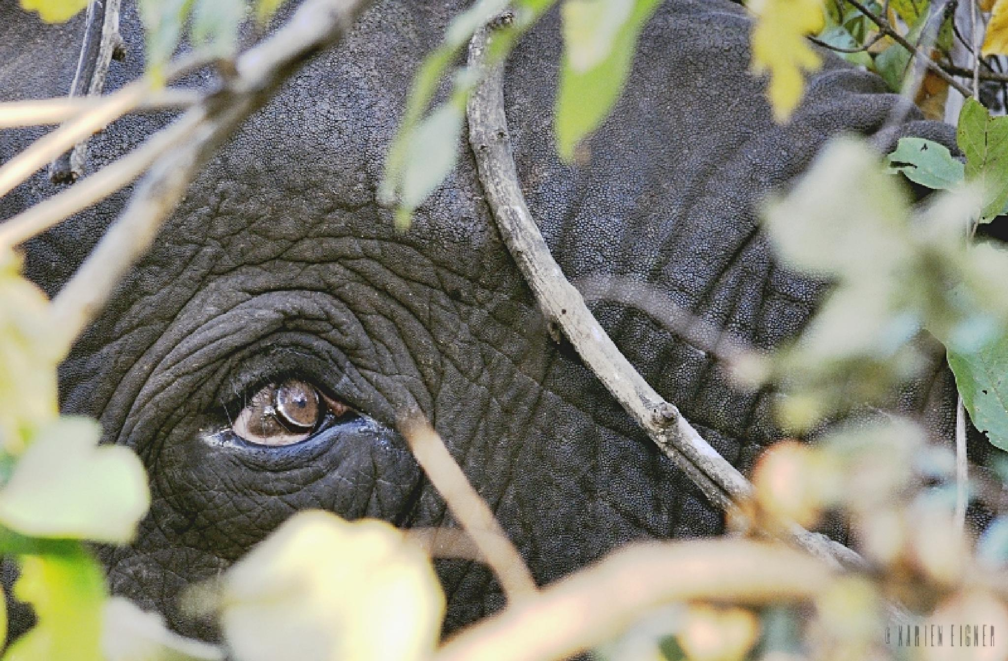 The intelligent eye of an elephant by Karien Eigner