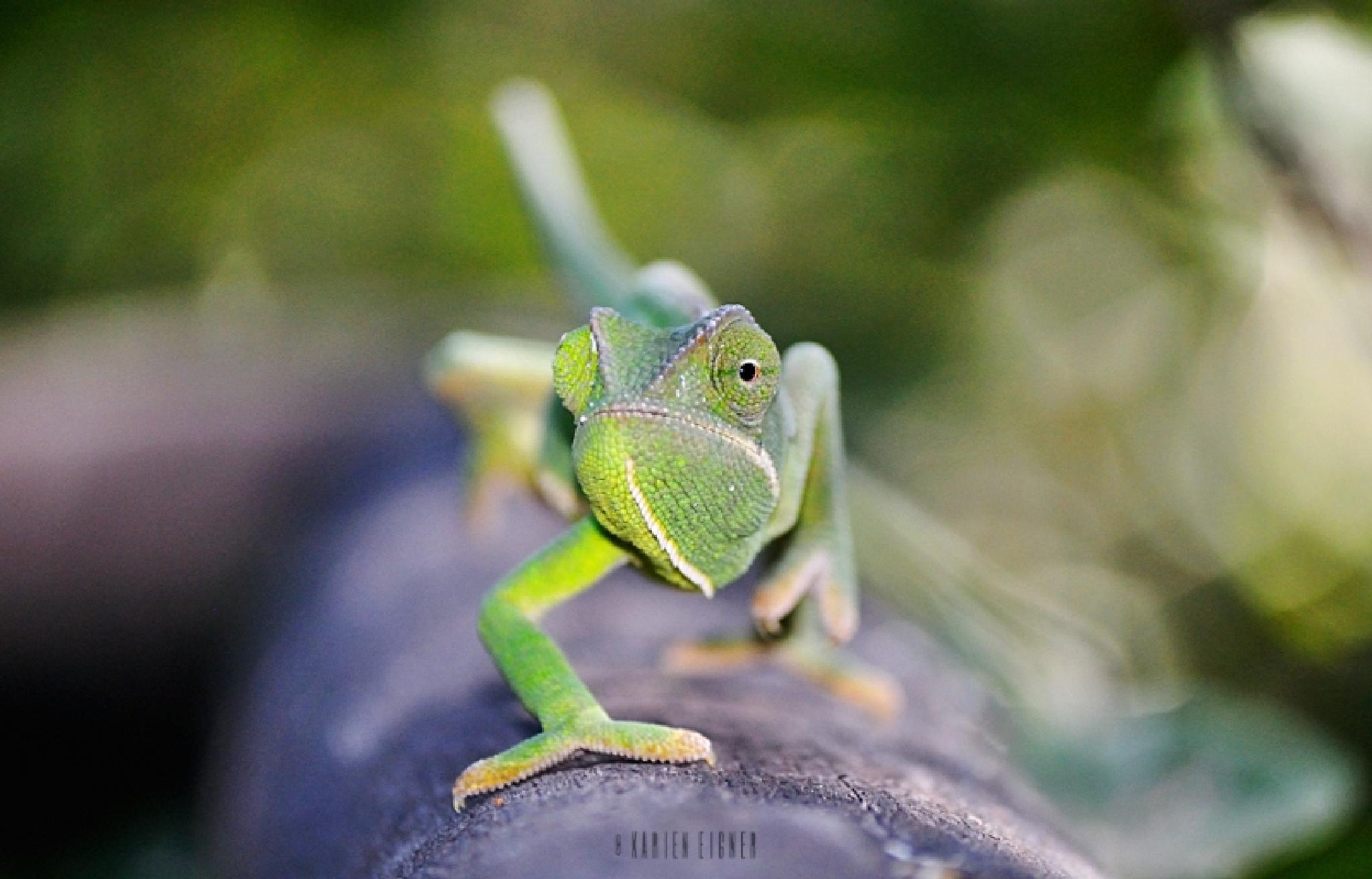 Chameleon  by Karien Eigner