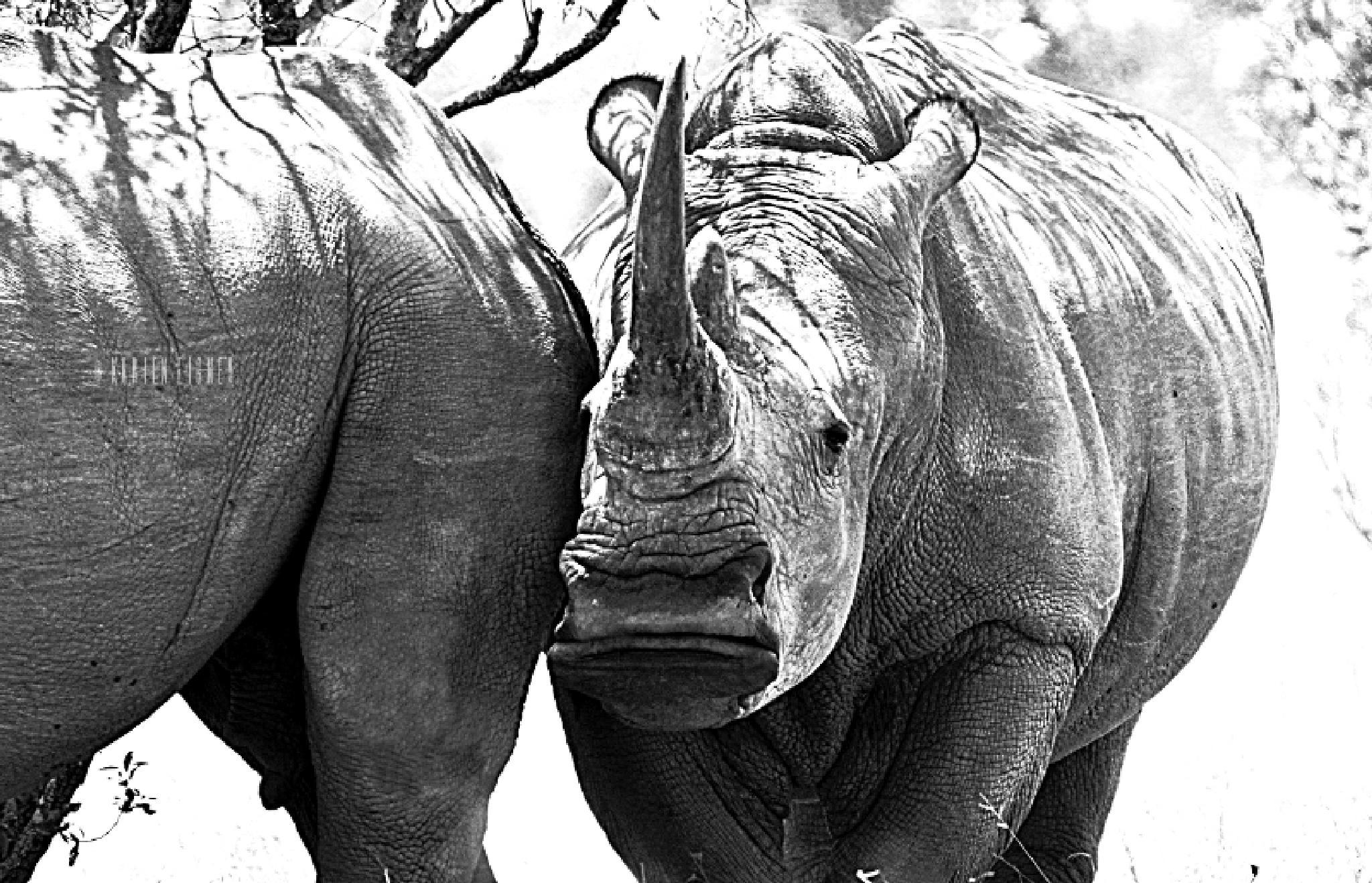 The magnificent white rhino by Karien Eigner