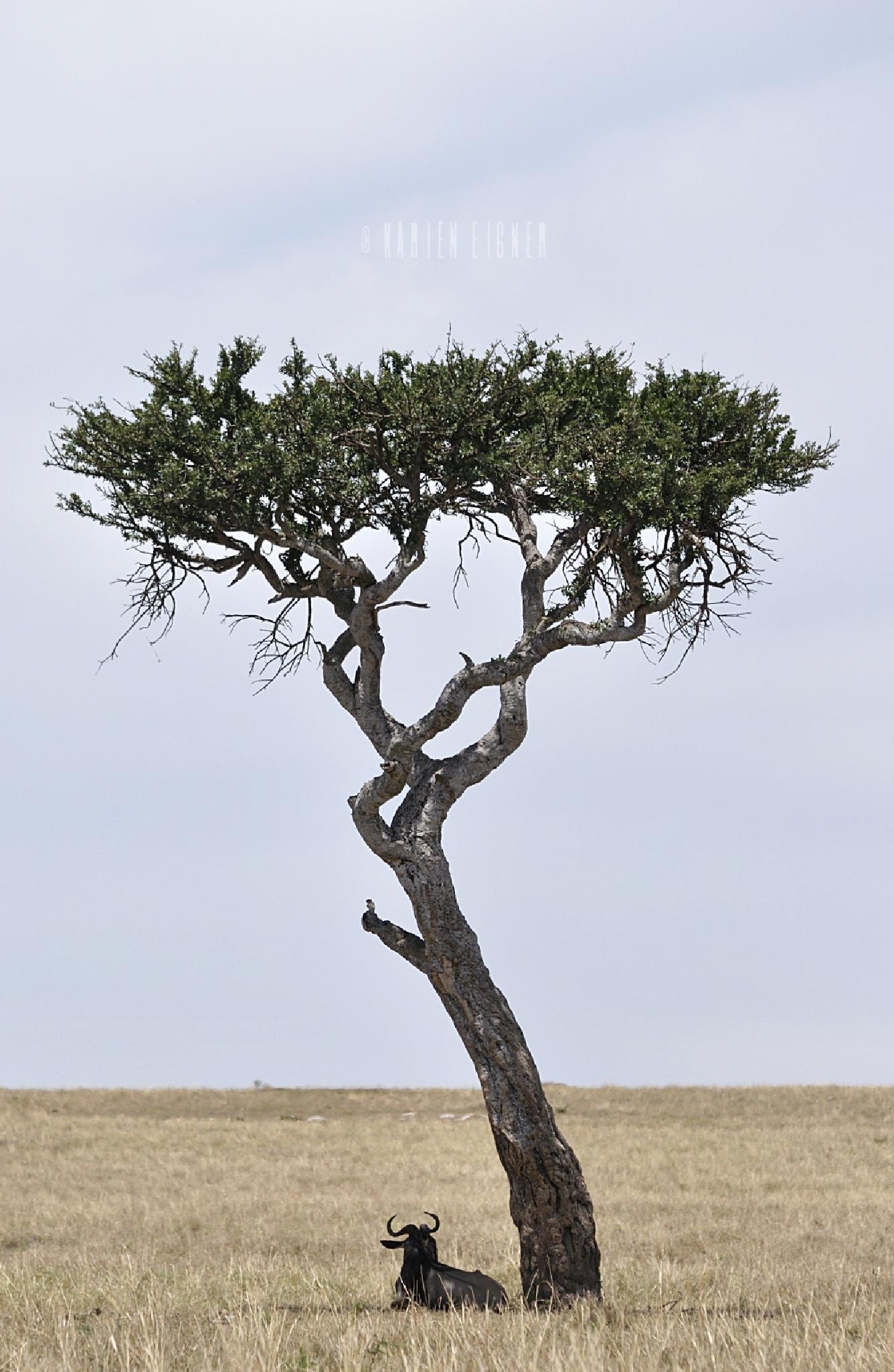 A lone wildebeest under a lone tree by Karien Eigner