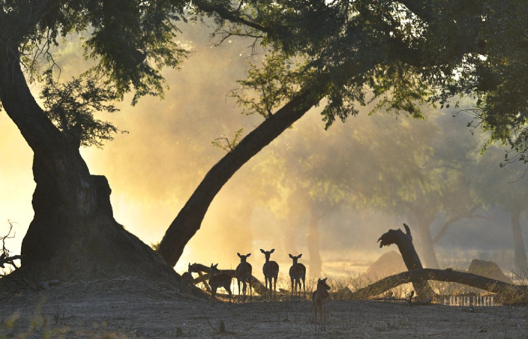 Early morning light in Mana Pools by Karien Eigner