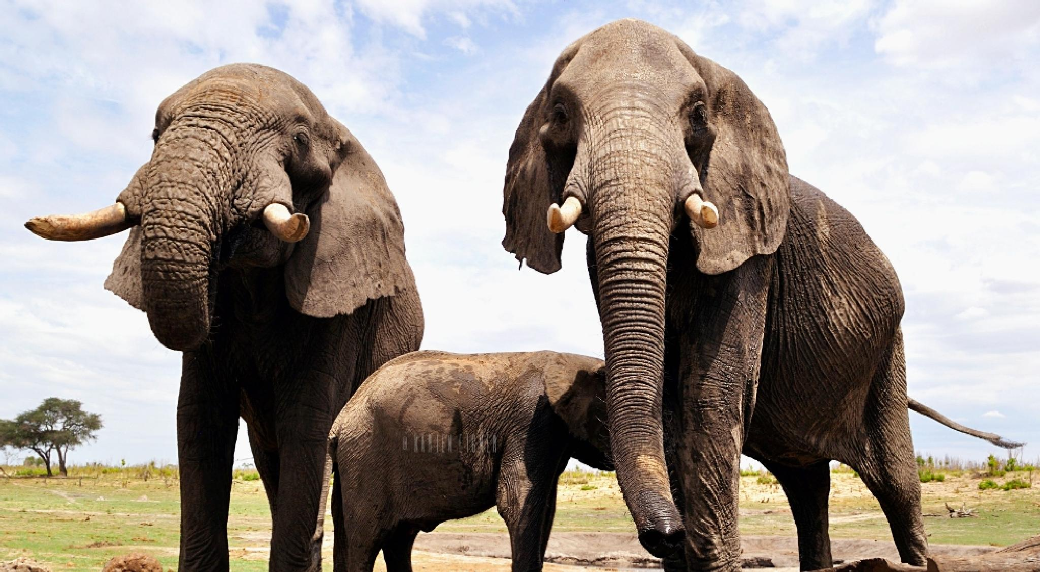 Up close & personal with Hwange's wild elephants by Karien Eigner