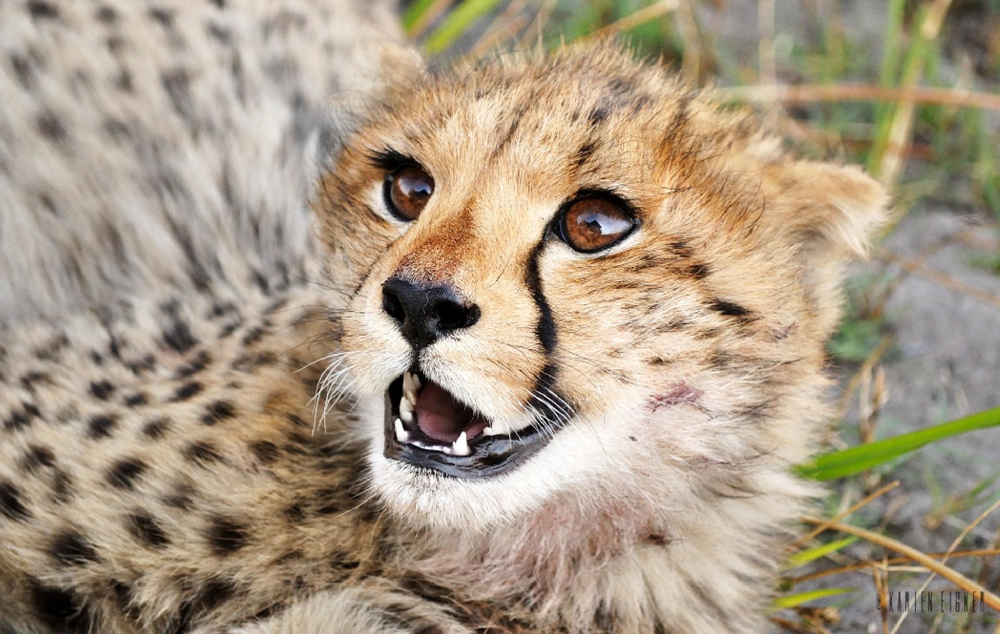 Cheetah cub  by Karien Eigner
