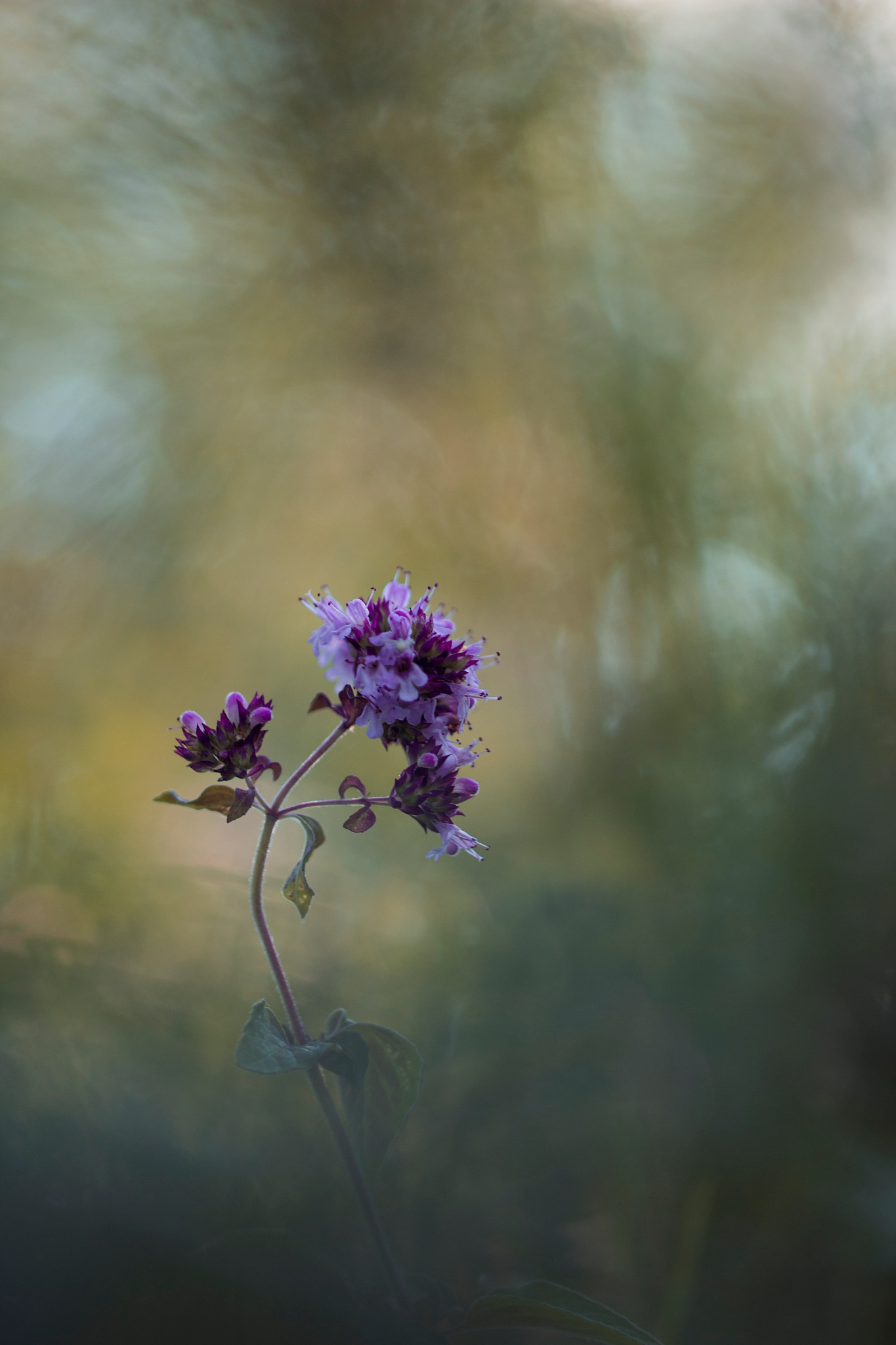 Flowers by Yves Droeven