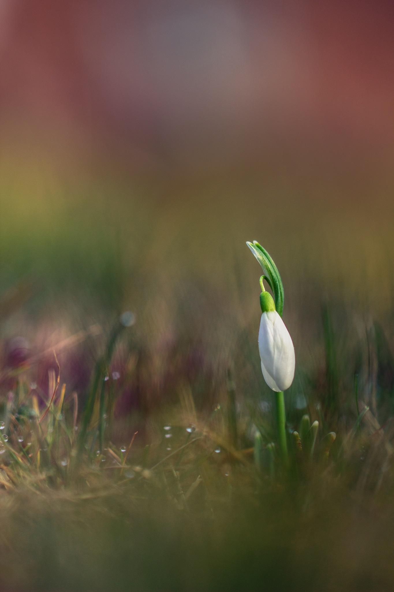 Fin de l'hiver by Yves Droeven