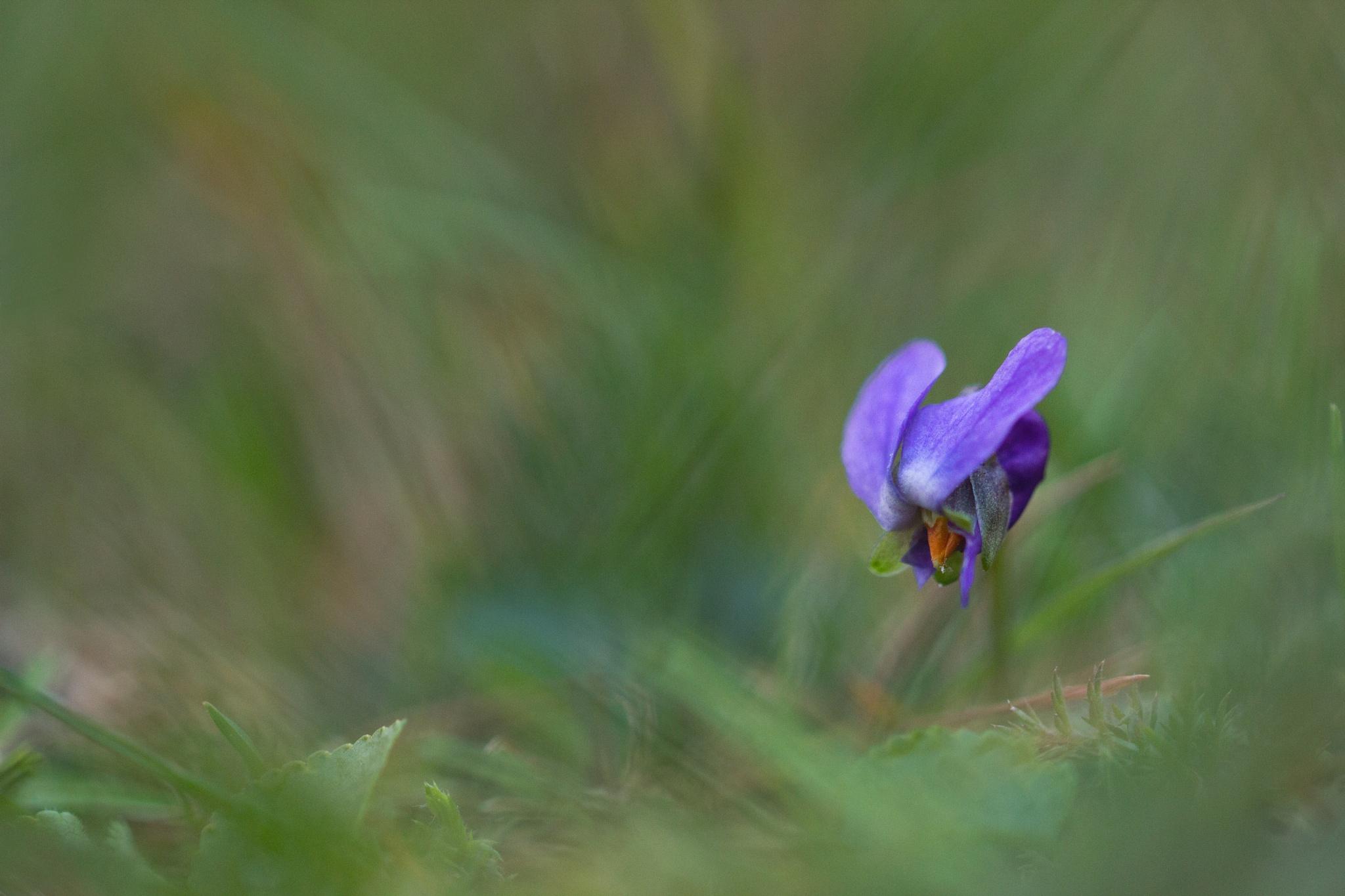 Fleur by Yves Droeven