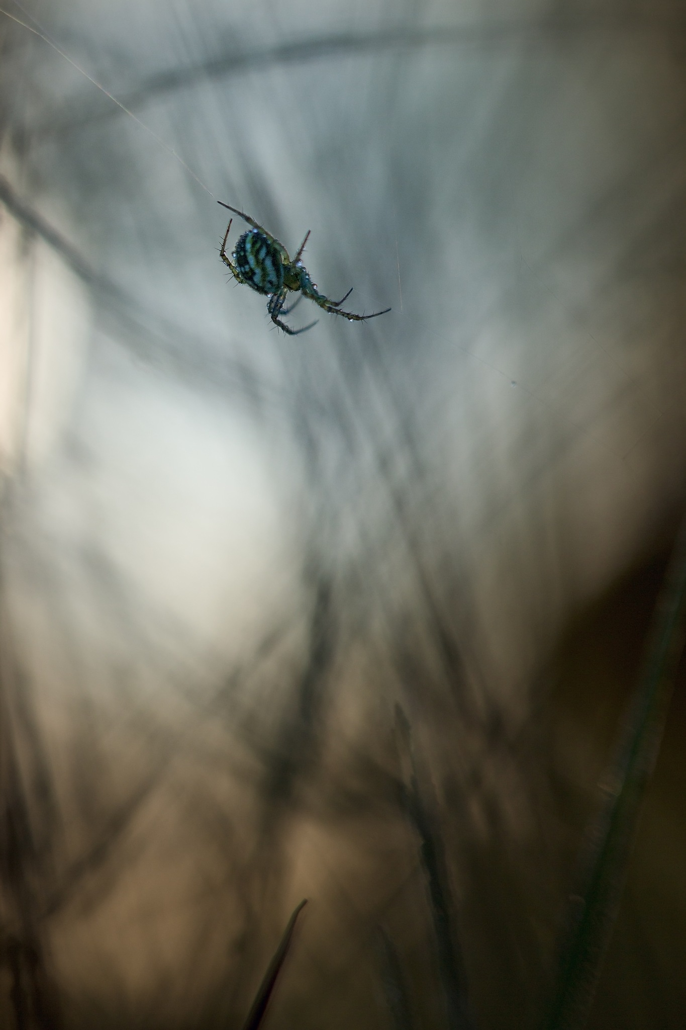 Spider by Yves Droeven