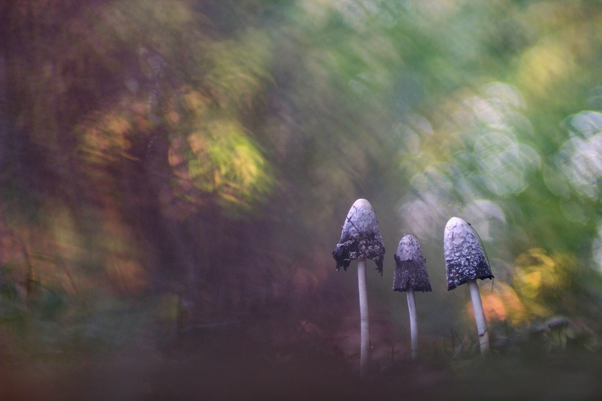 Champignons by Yves Droeven