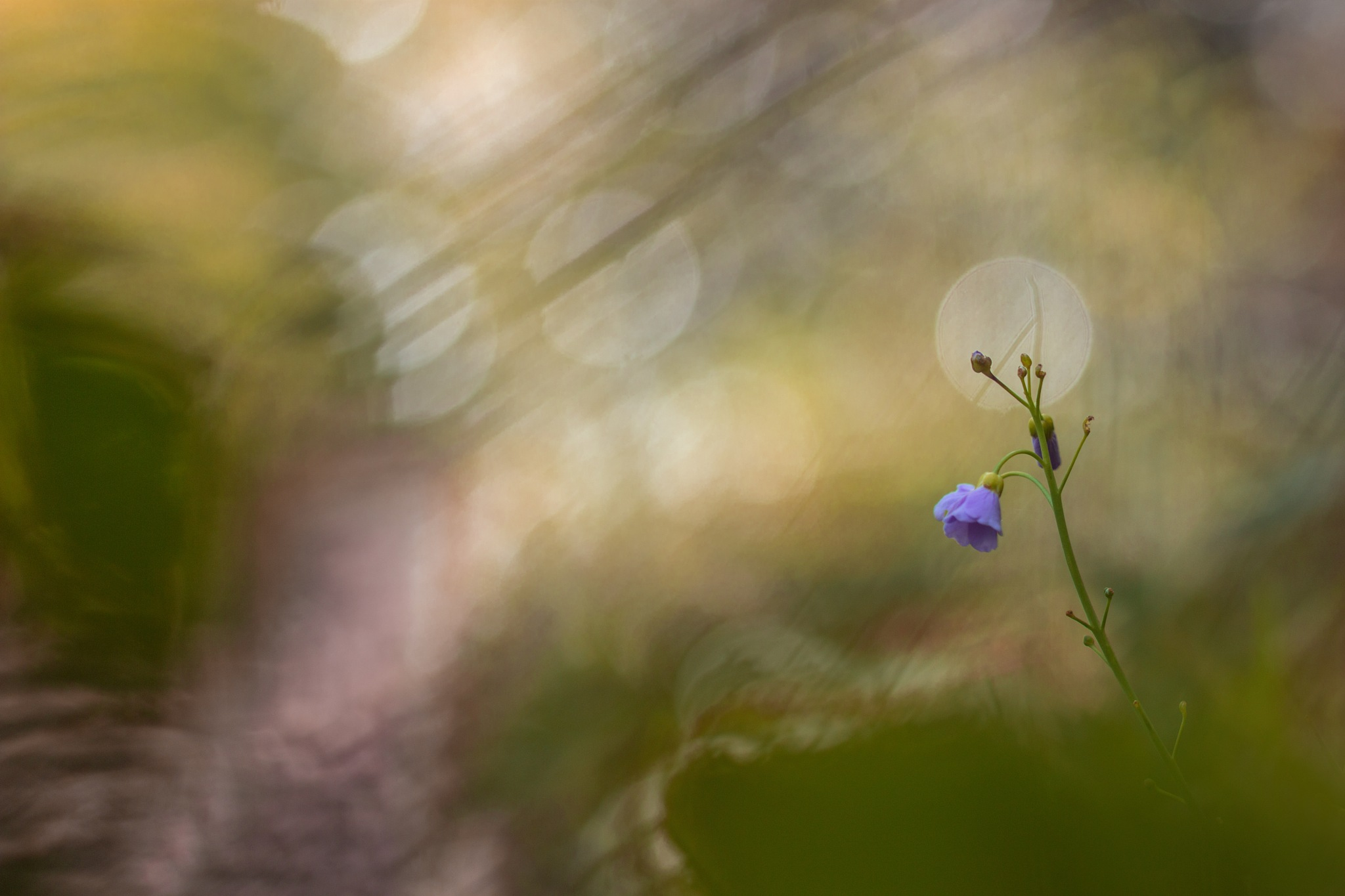Flower by Yves Droeven