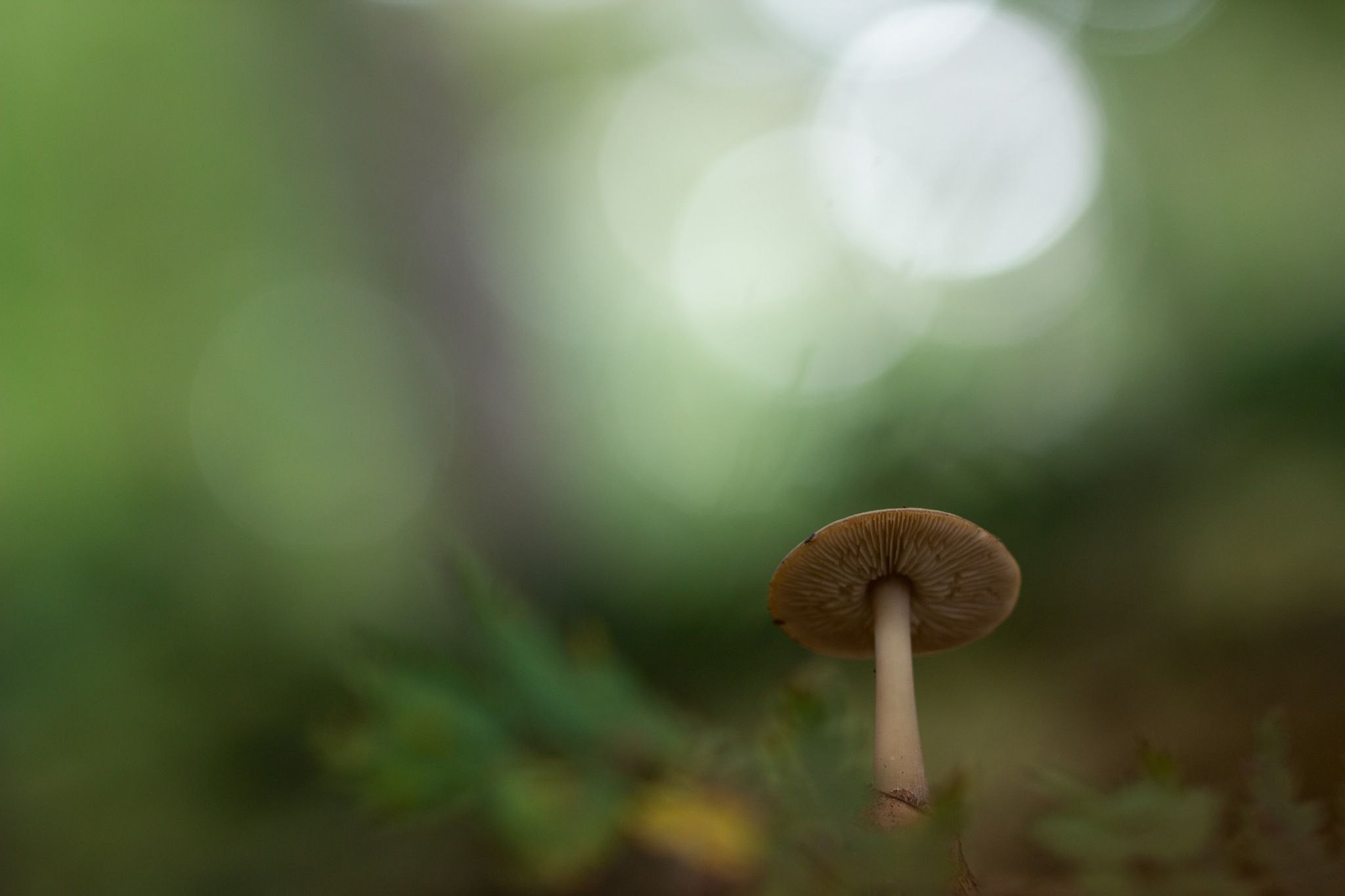 Champignon by Yves Droeven