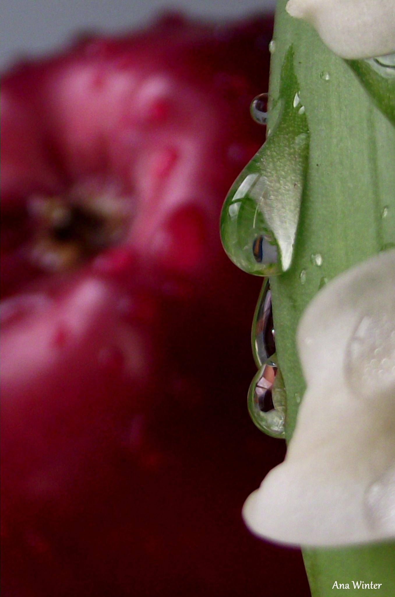 Rain drops by Ana Winter