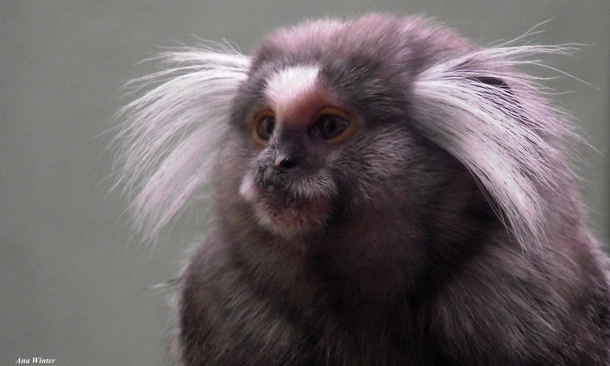 Funny little monkey  by Ana Winter