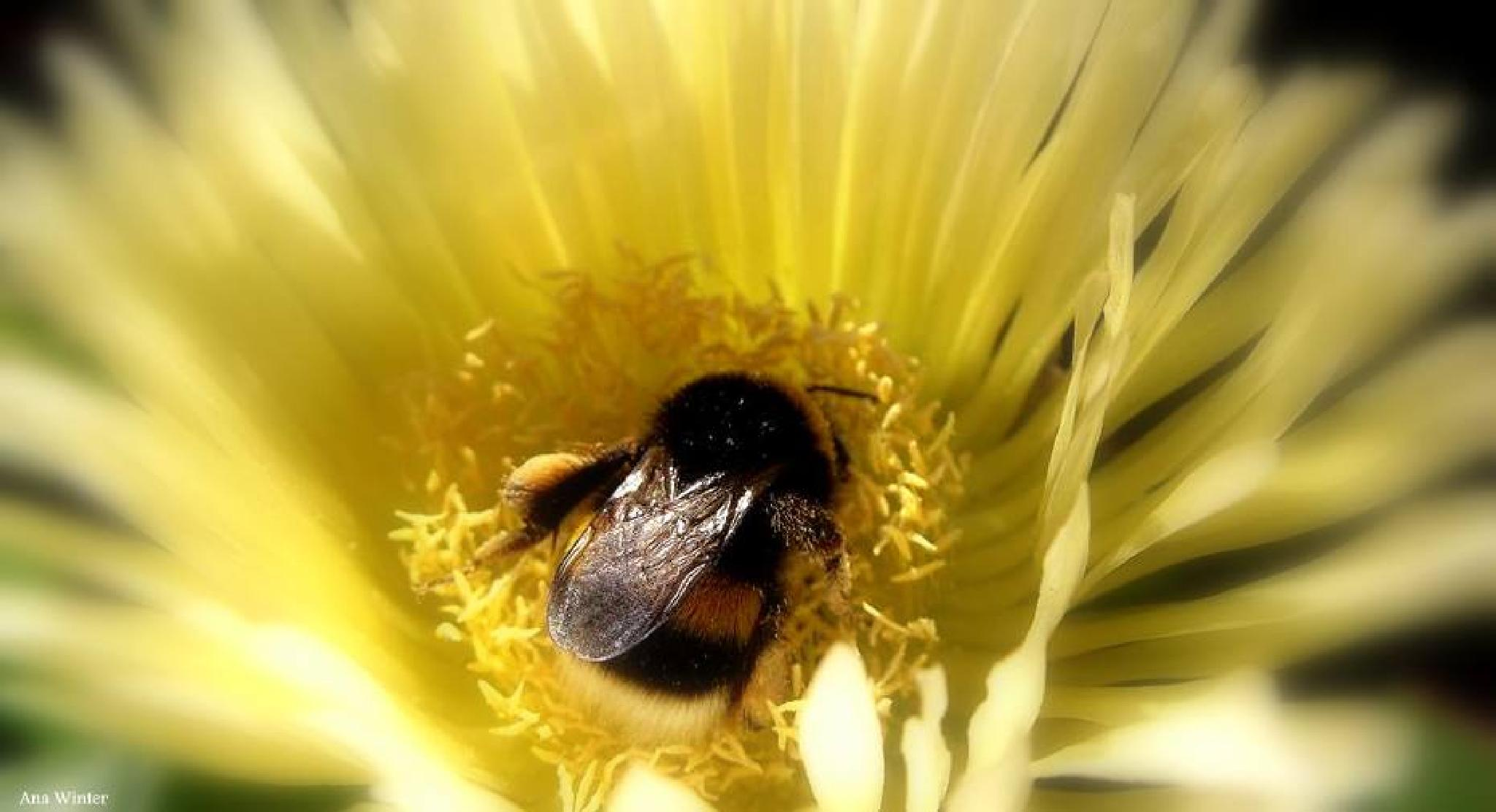 I love Bumblebees by Ana Winter