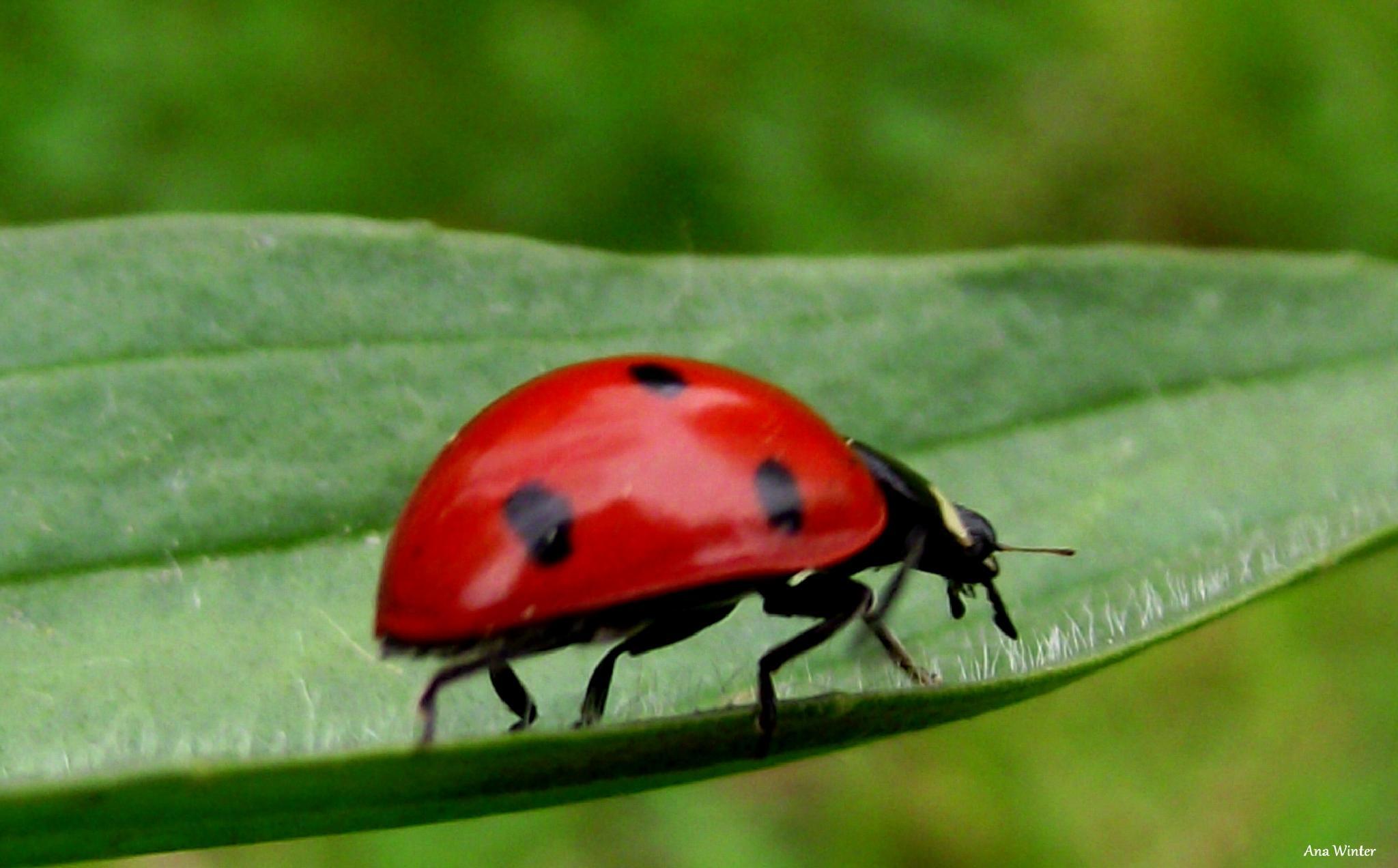 Fast Lady Bug by Ana Winter