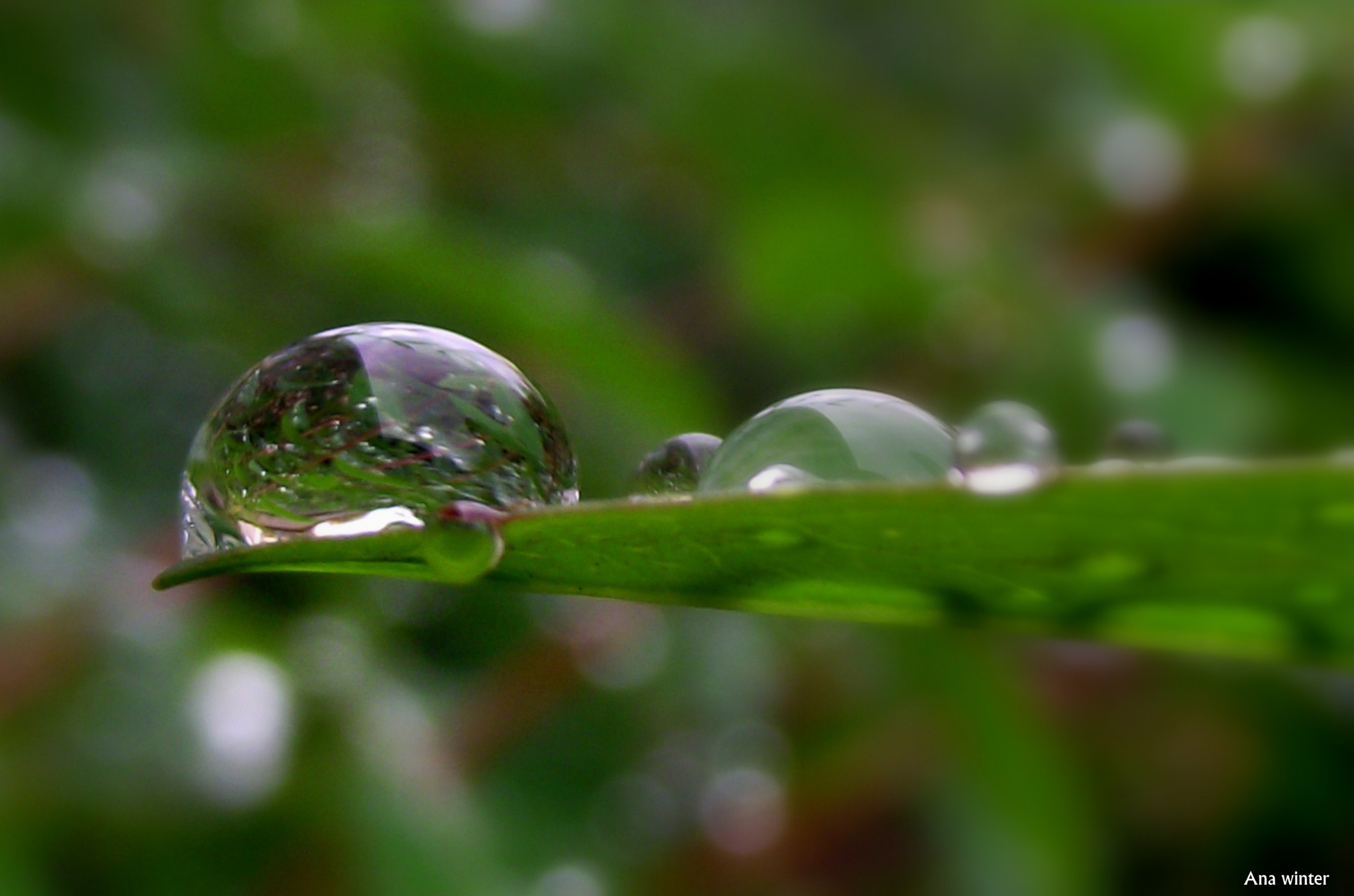 Confusion inside a droplet by Ana Winter