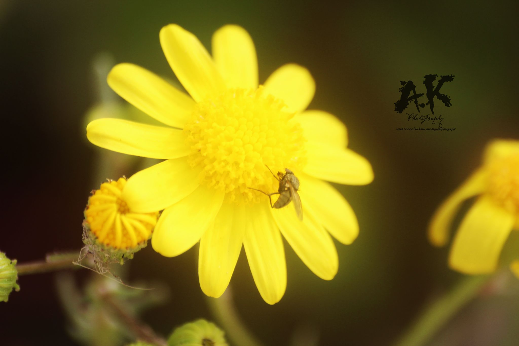 Bee <3 by A.K Photography