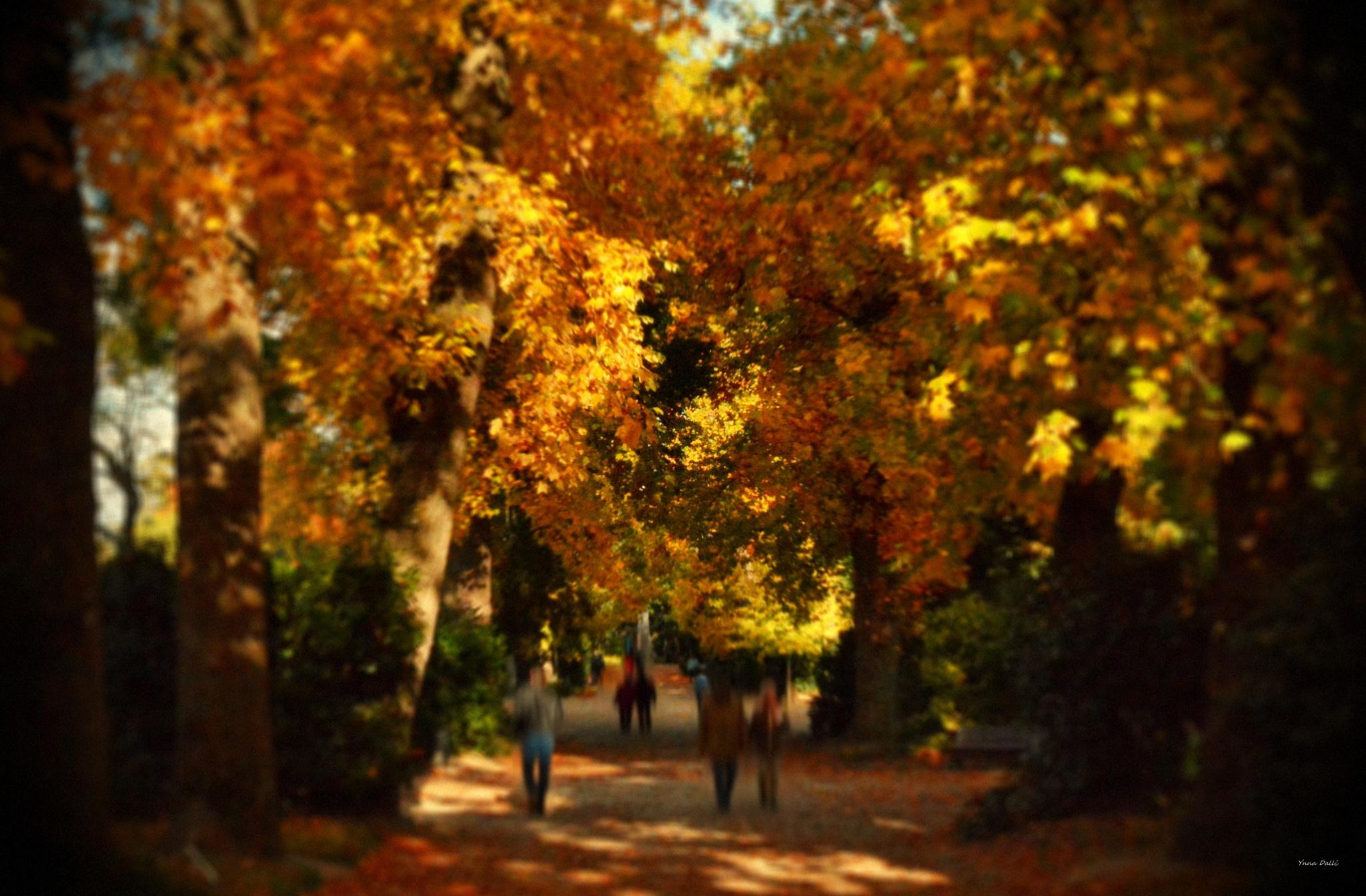 """""""""""Brunes, vertes, jaunes ou rouges, les feuilles d'automne  tapissent le sol où plus rien ne bouge""""  by YnnaDalli"""