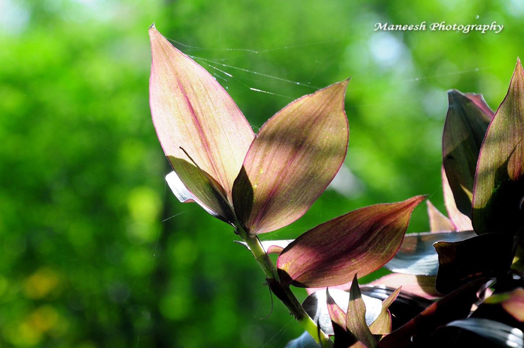 Leafage by Maneesh Sharma