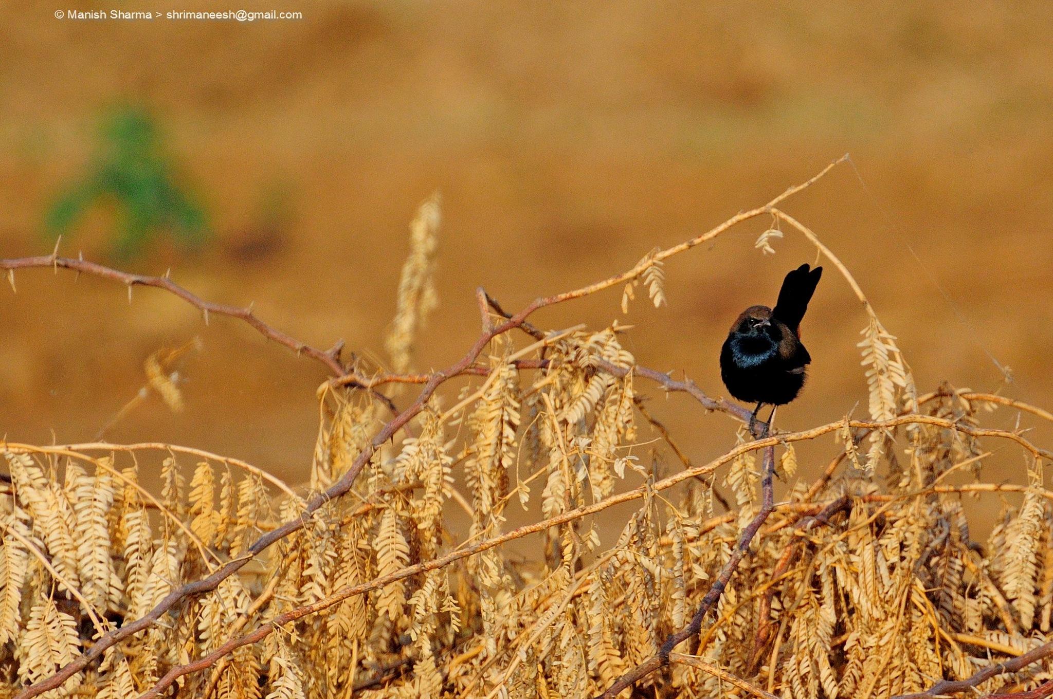 Untitled by Maneesh Sharma