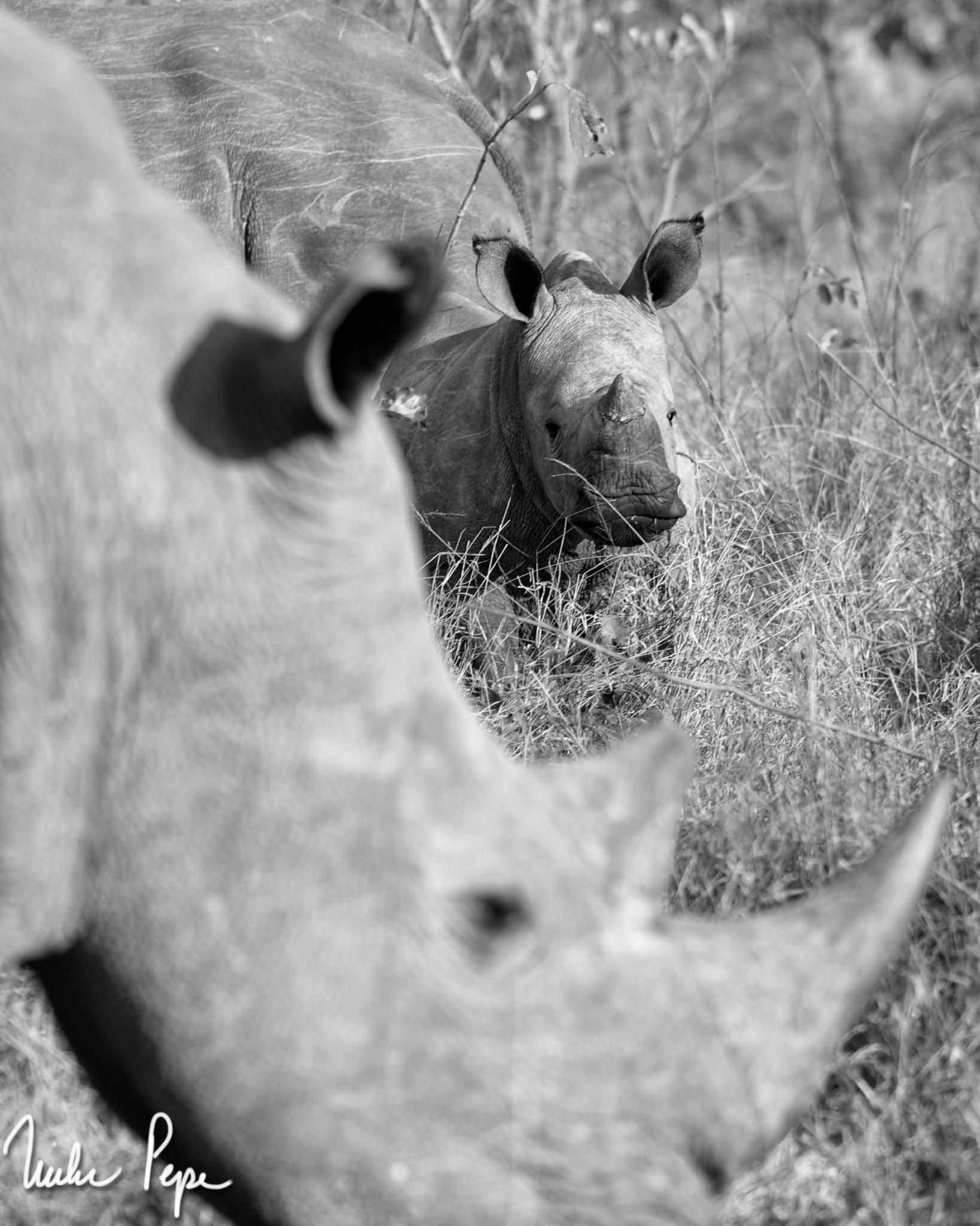 Photo in Animal #rhino #sabi sands #south africa