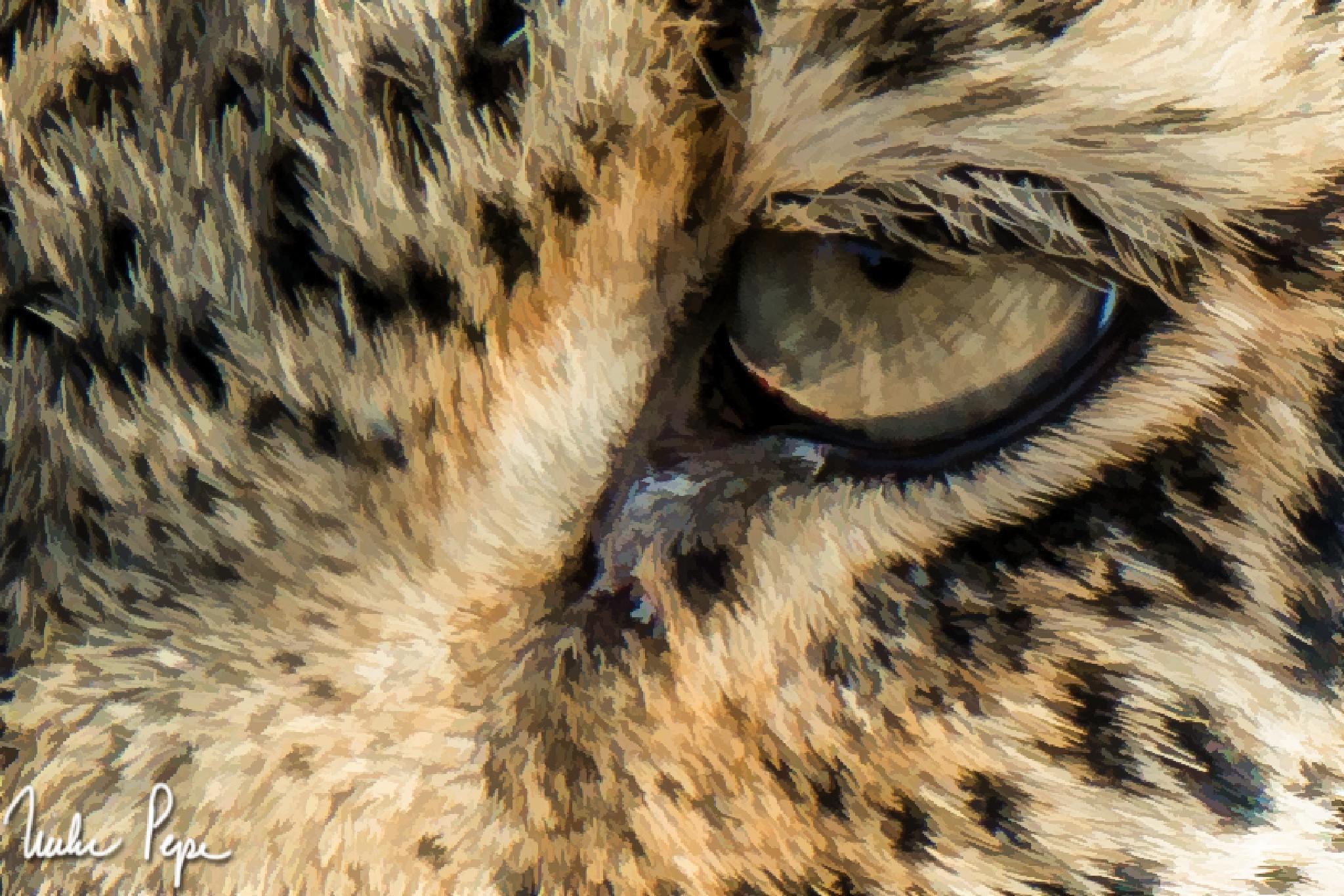 Leopard Eye by Mike Pepe