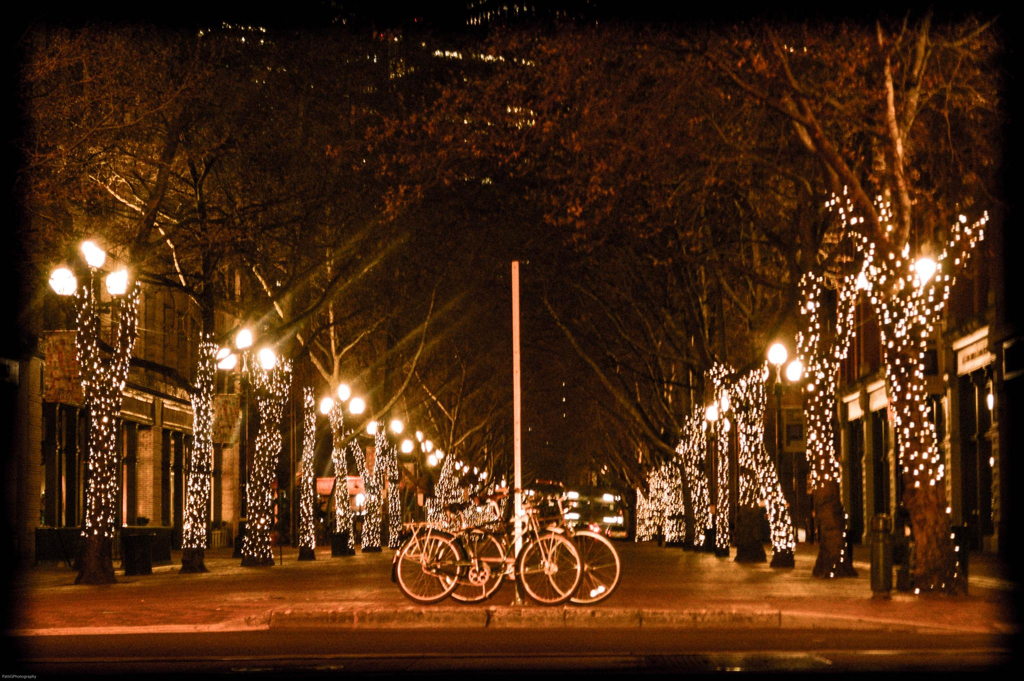 Night Rider by Patti Lin