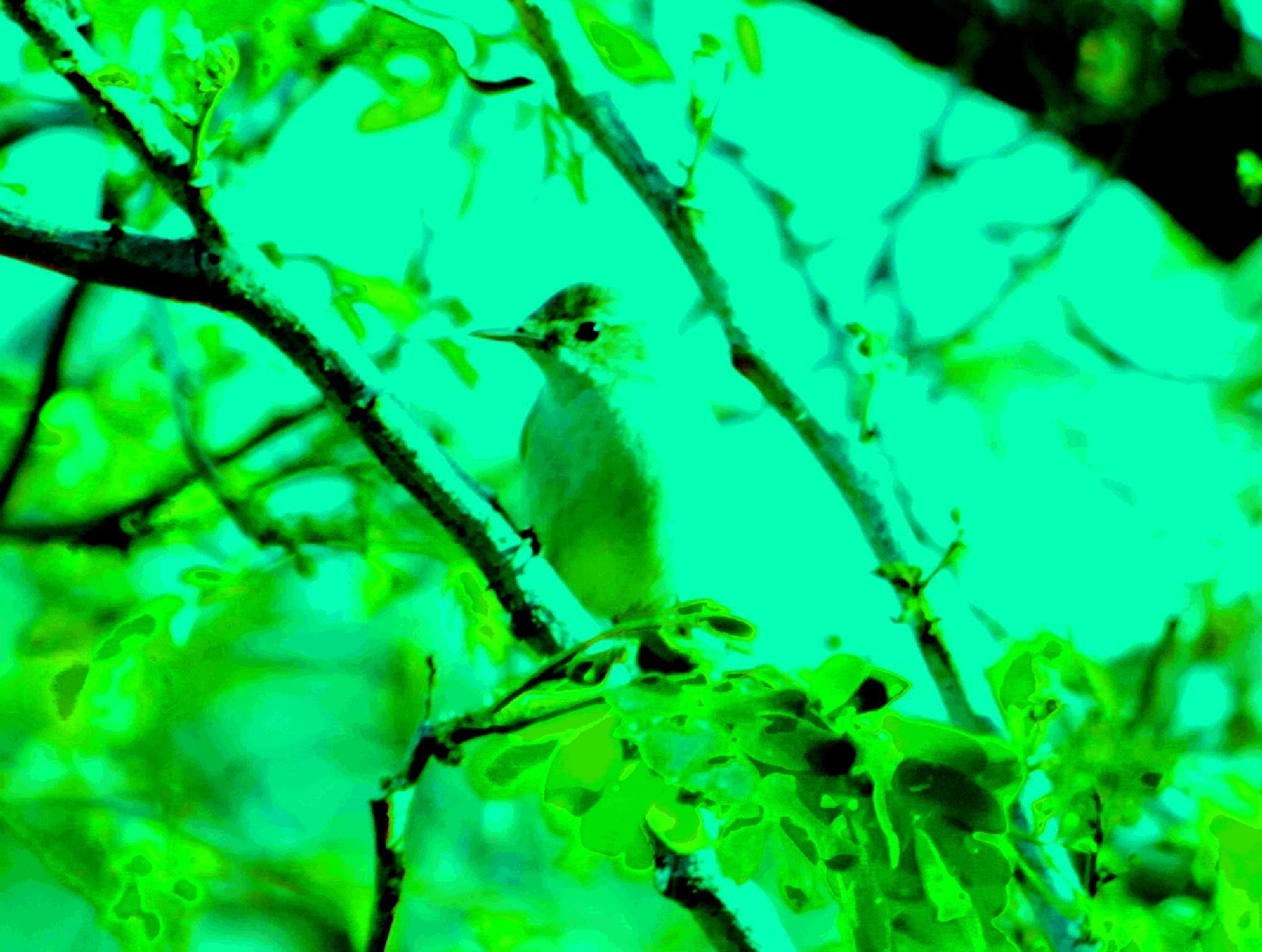 tree warbler by Sanjay Sinhasane