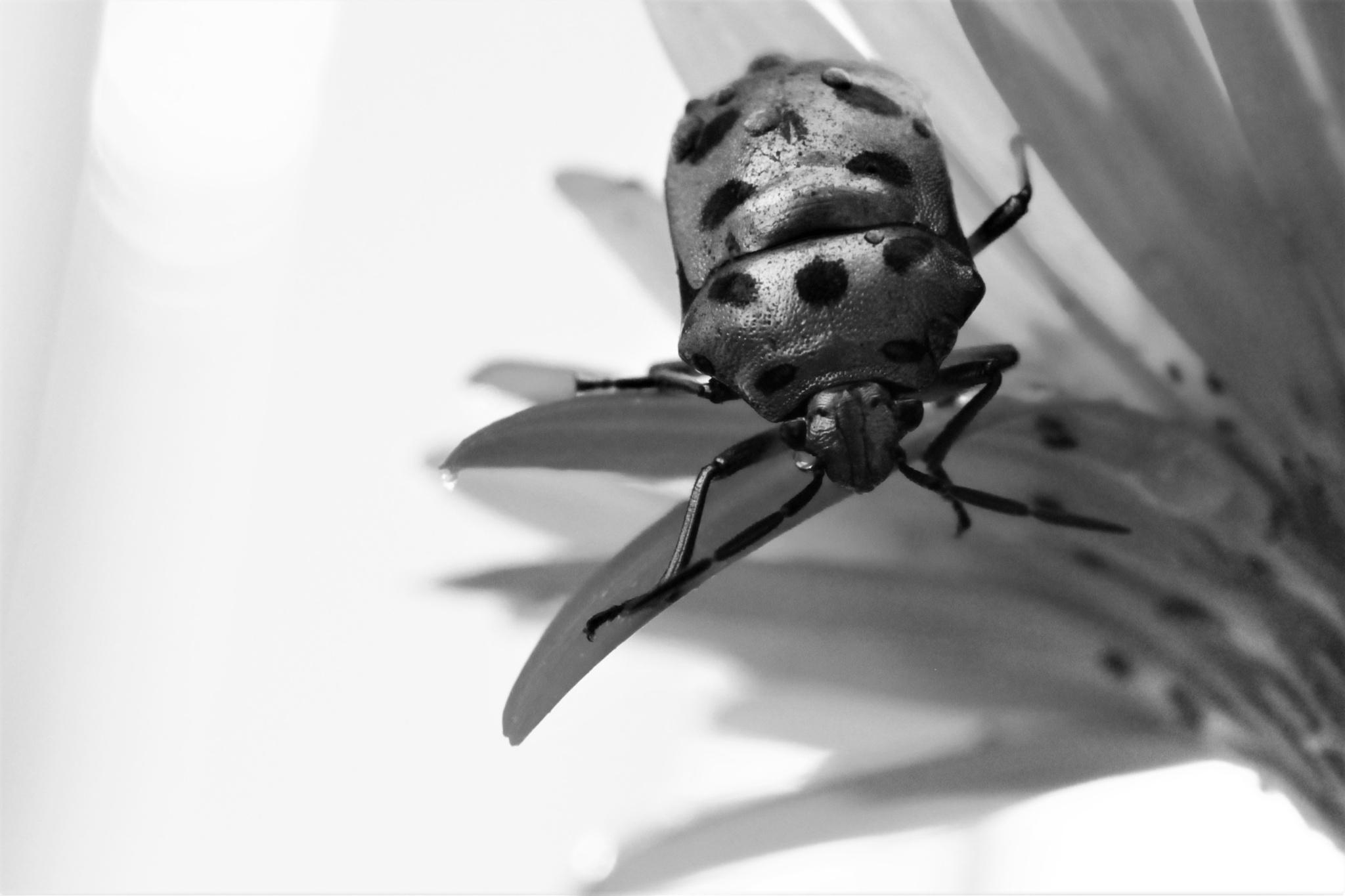The Beetle BW by Sanjay Sinhasane