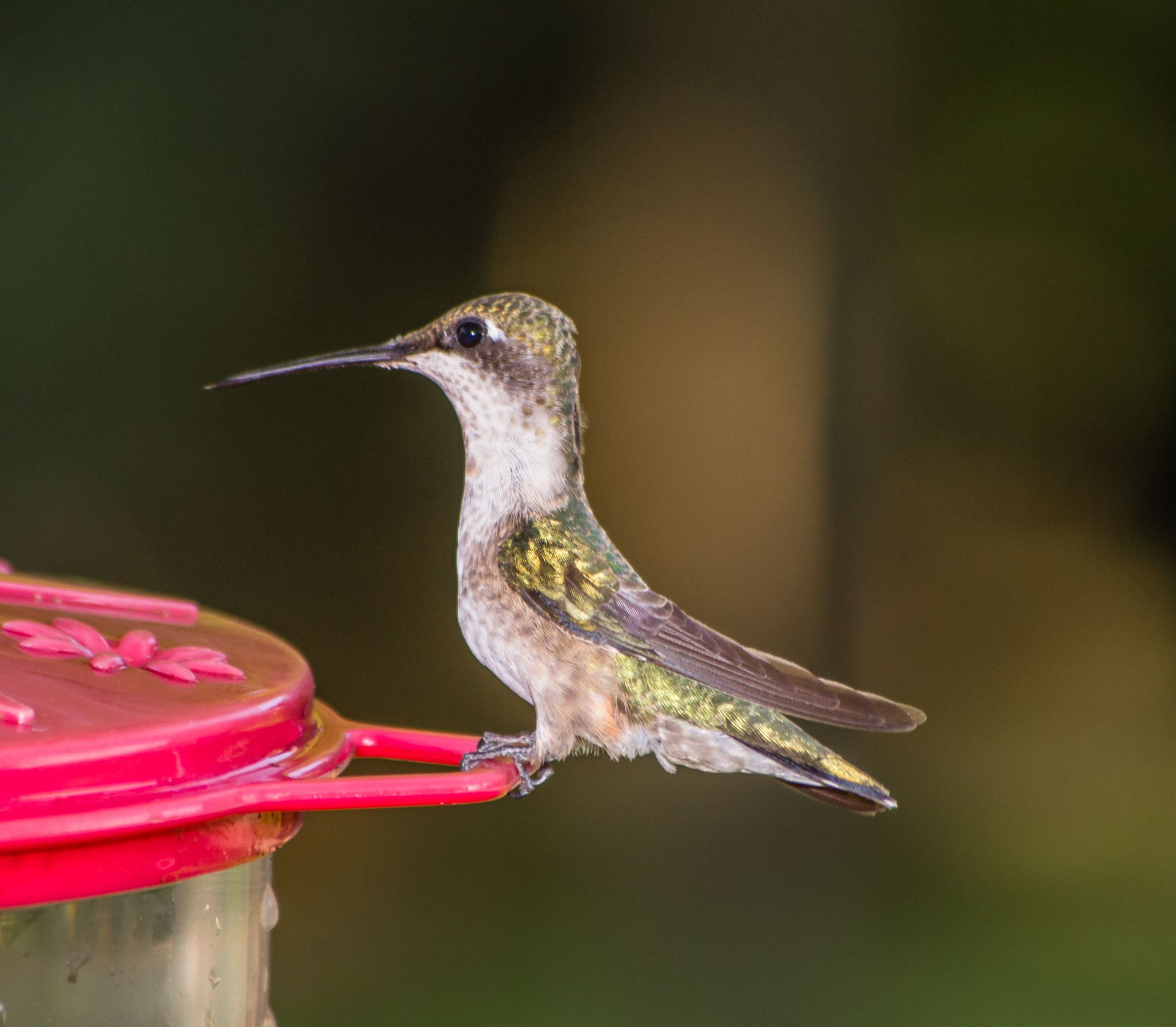 Ready to Eat! by jenmcwhirt