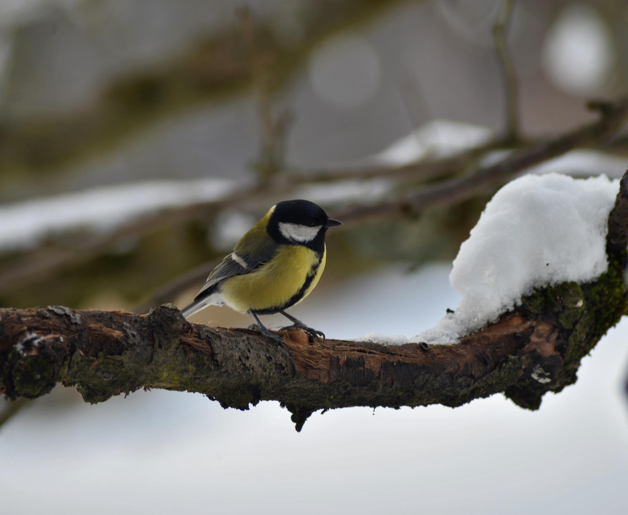 Bird by Markus Auer