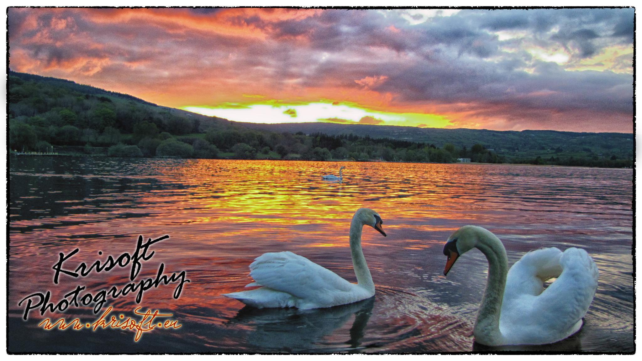 Swans on beautiful sunset by Krzysztof Luszczki