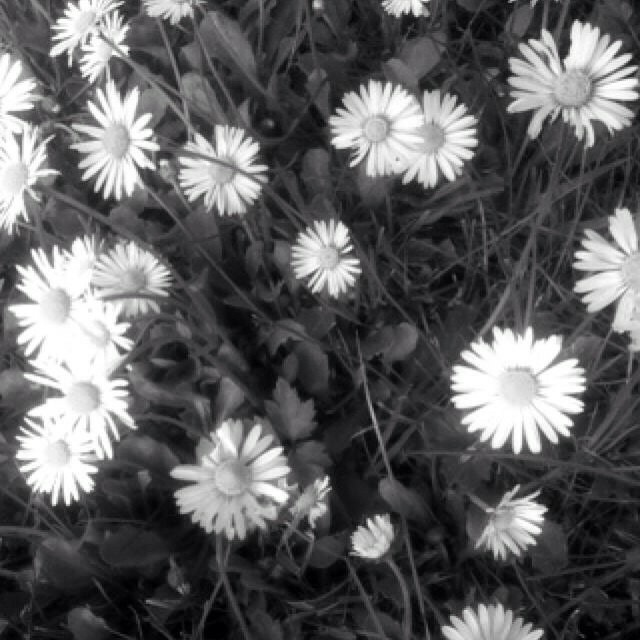 Flowers by MMPhoto